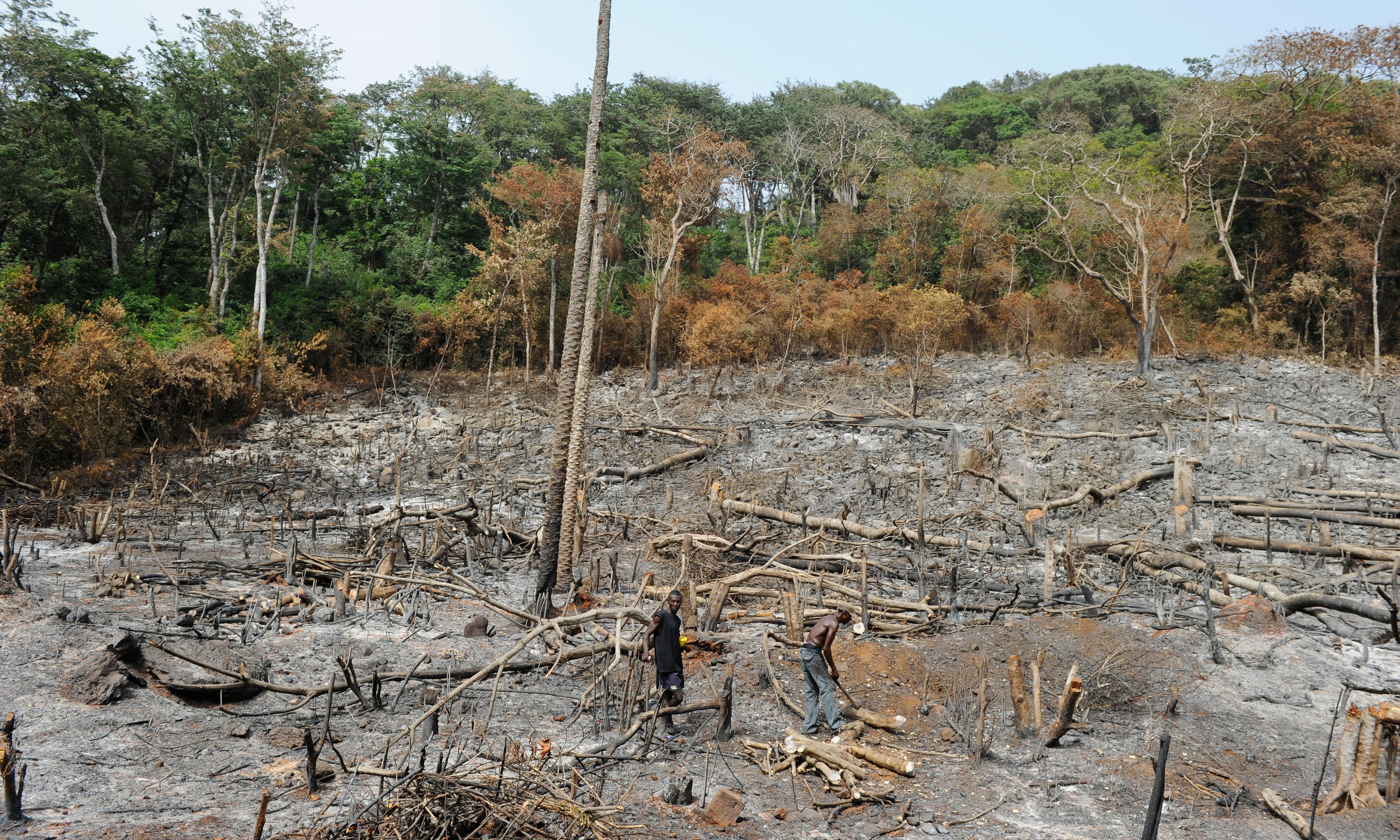 Deforestation damage goes far beyond the Amazon