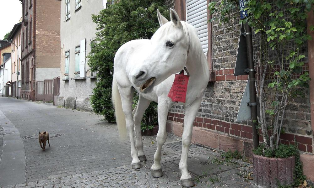 25-year-old horse named Jenny strolls through the streets followed by a small dog during her daily walk in Fechenheim near Frankfurt am Main, western Germany, on 28 April 2020.