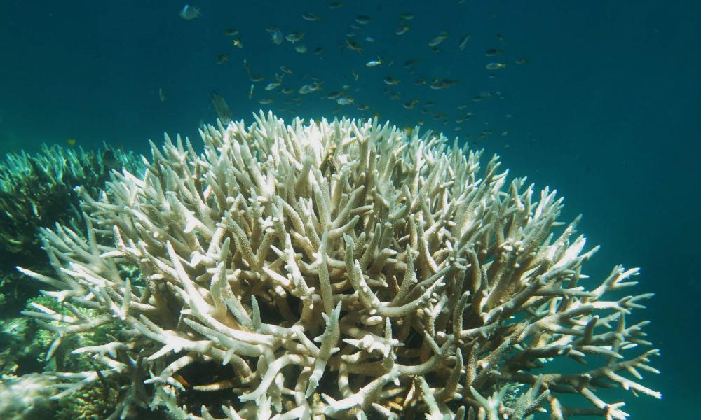 Bleached coral at Mission Beach Reefs