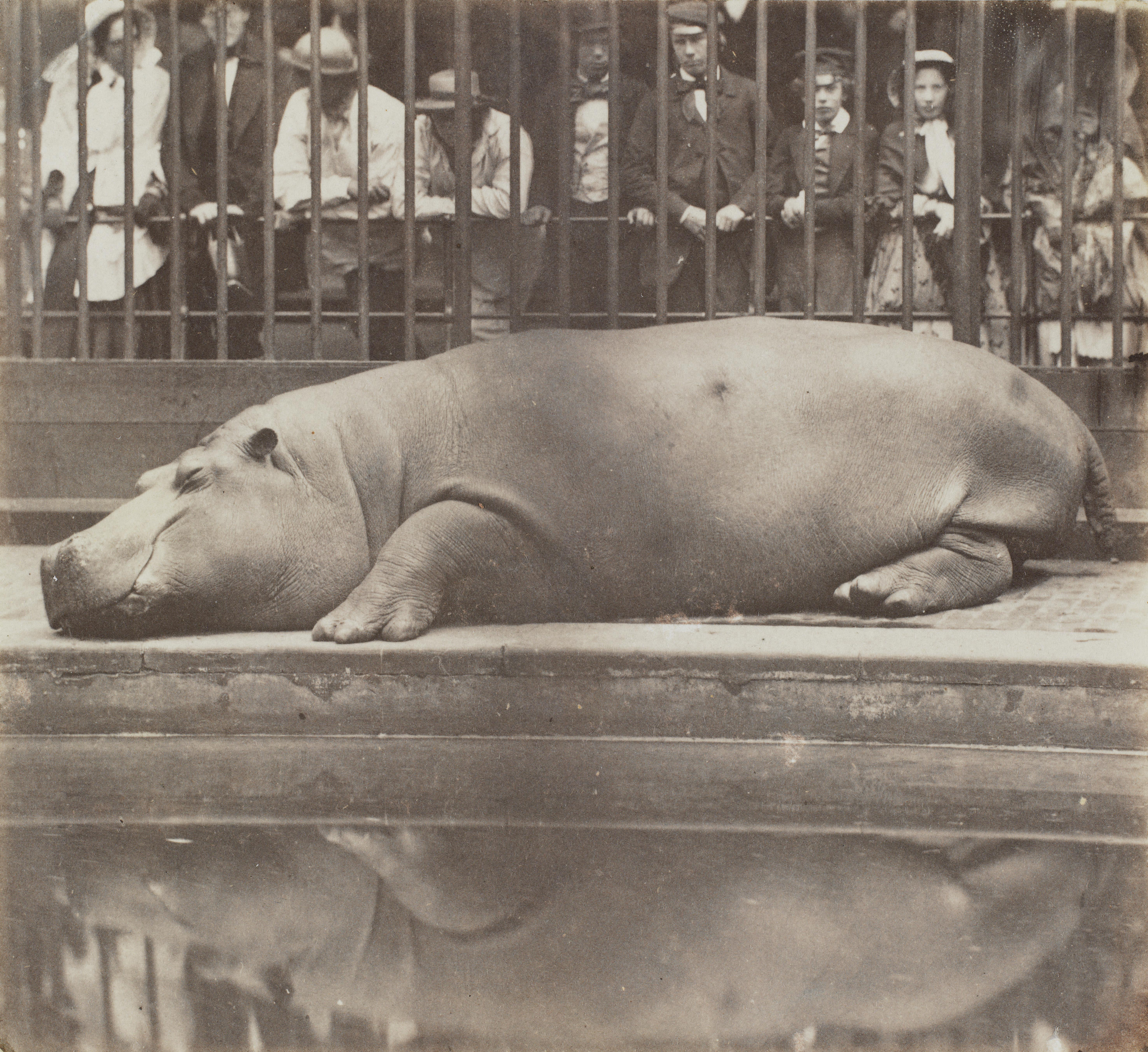 Please don't wake the hippo! The V&A unpacks its glorious photography archive