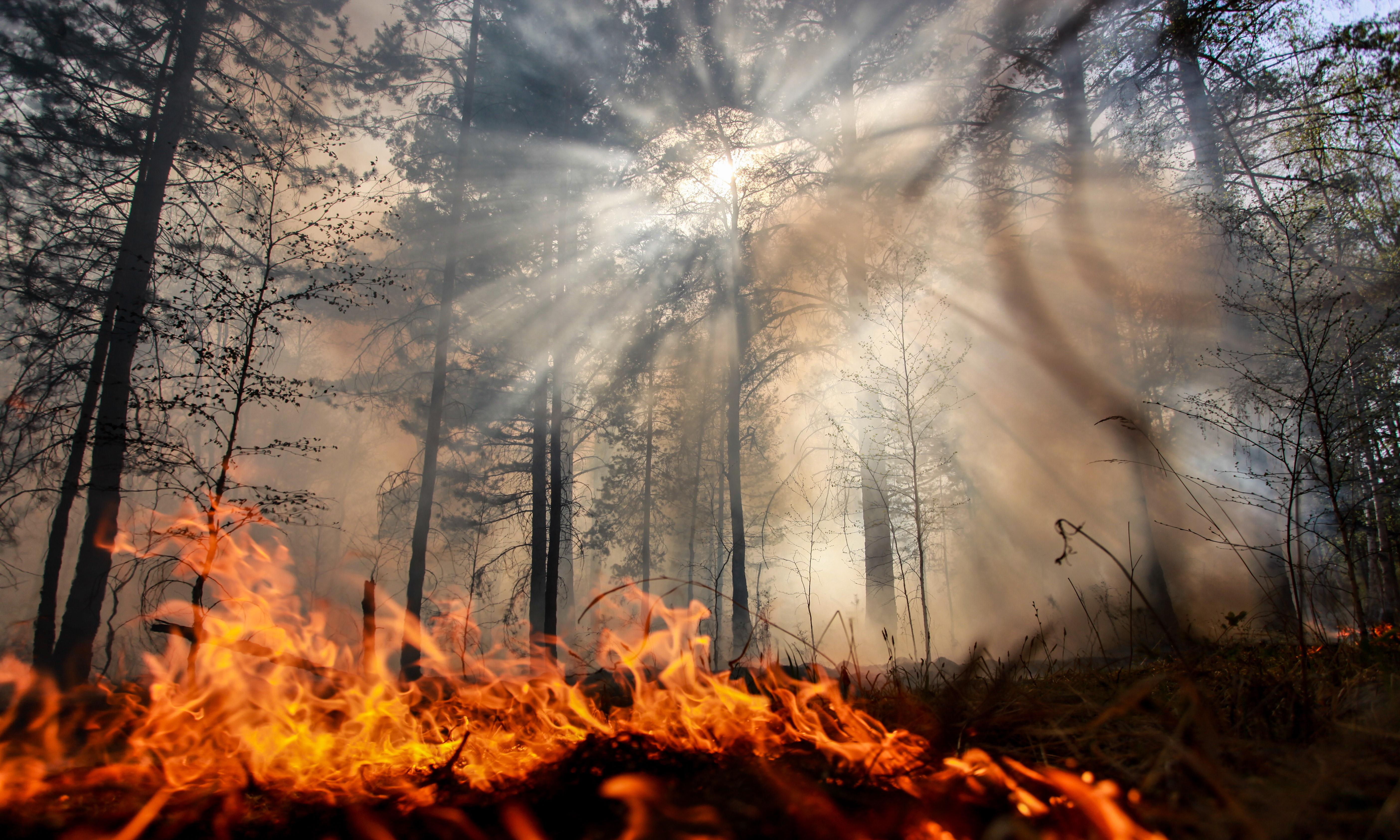 The world is literally on fire – so why is it business as usual for politicians?