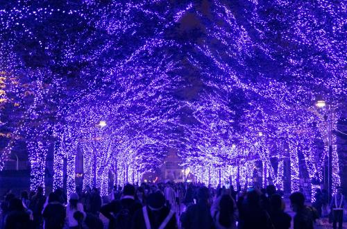 Over 5,000 lights illuminate a path