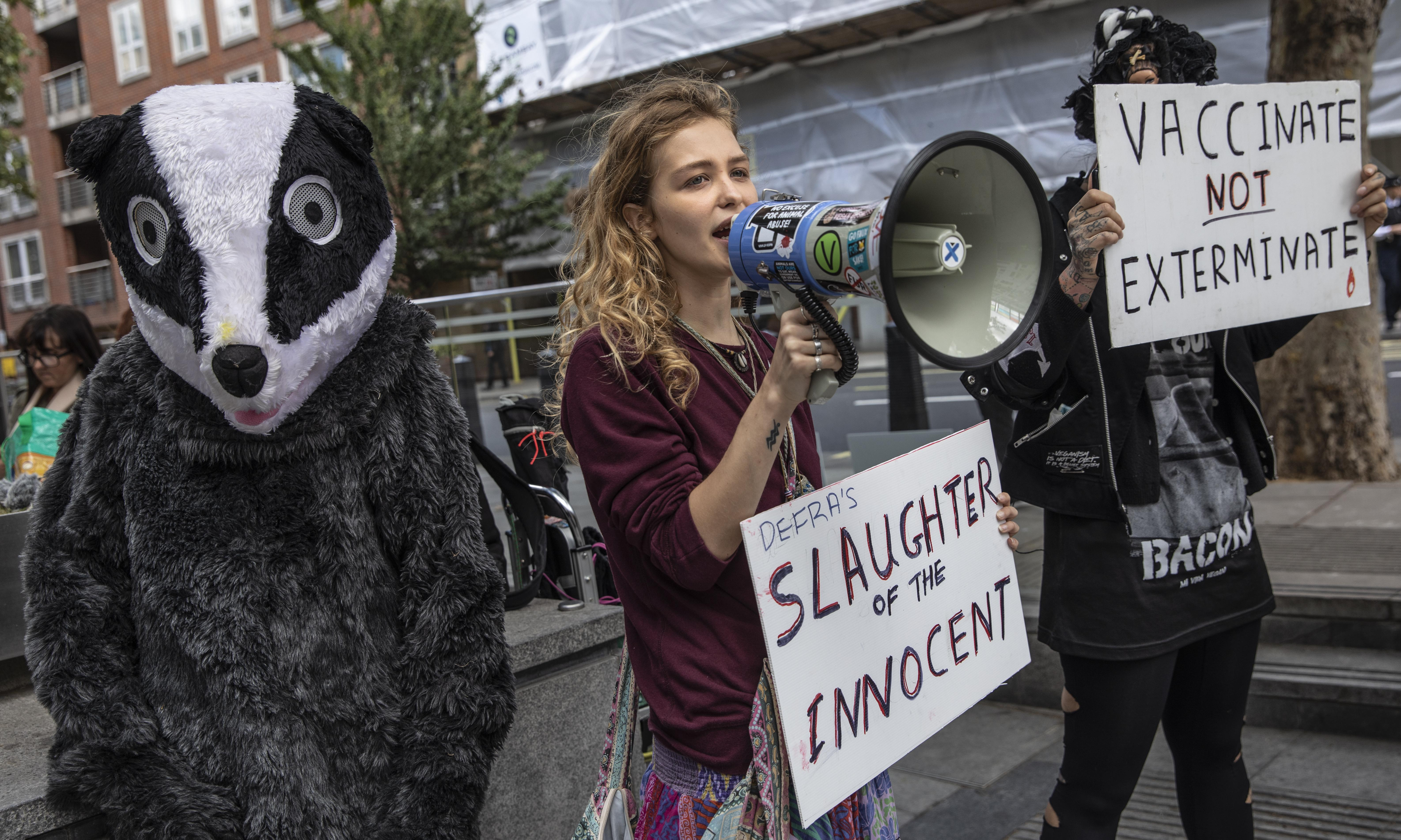 Call to stop 'badger massacre' as cattle TB rises in cull zones