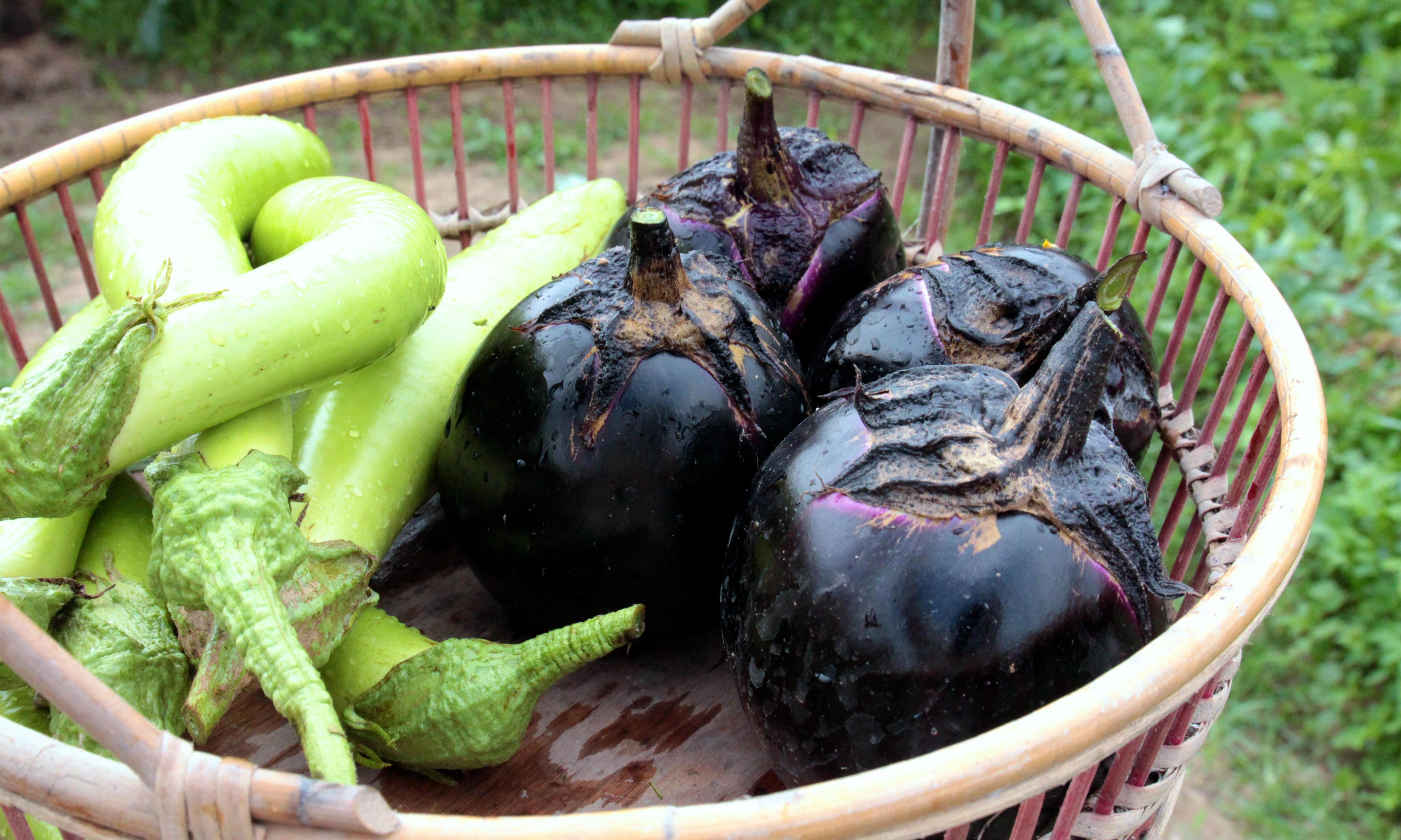 Tender and luscious: no other eggplant compares to this