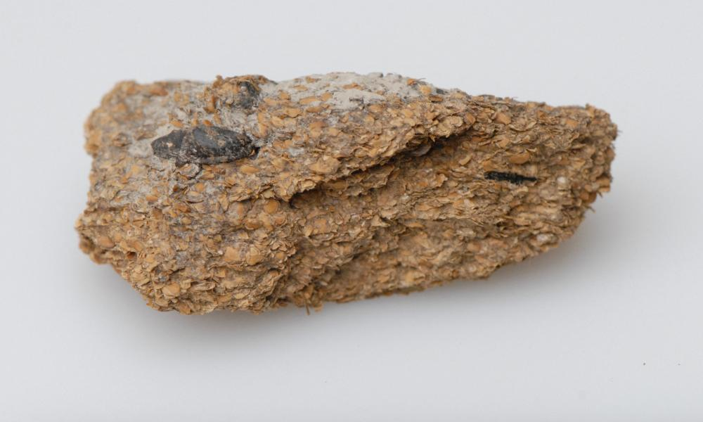 An analysis of ancient human excrement from the Hallstatt salt mines in Austria revealed a diet of beans, millet and barley.