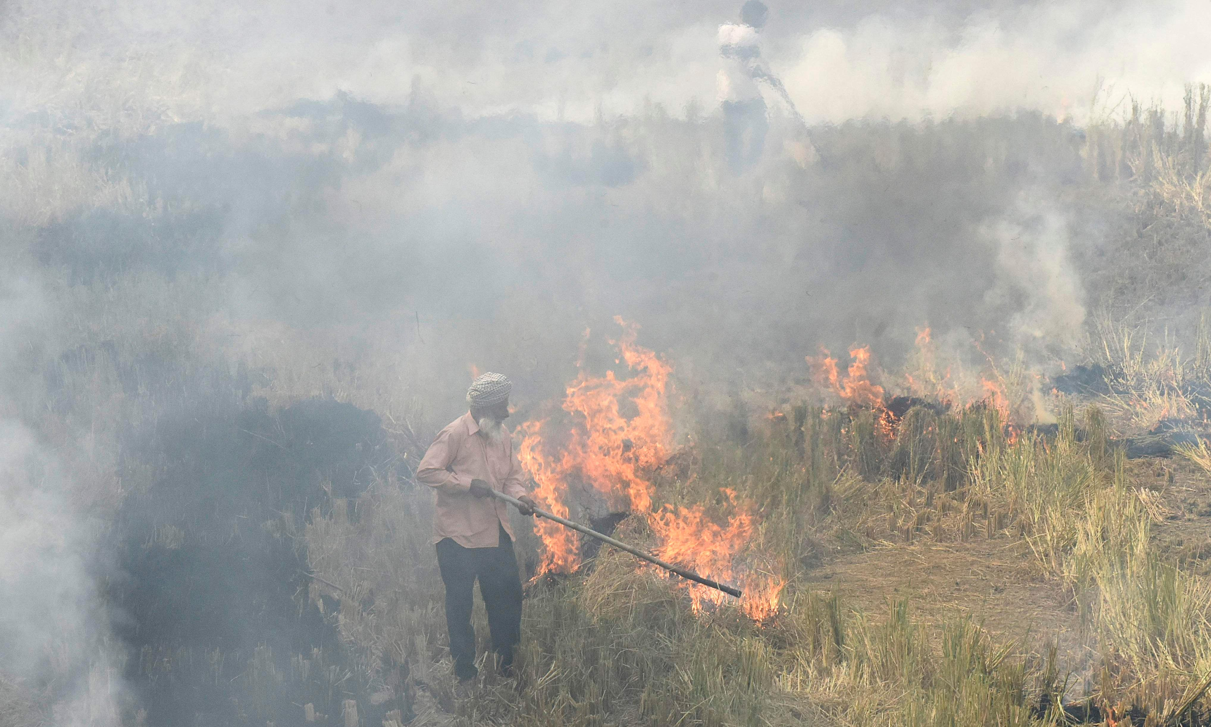 Delhi's smog blamed on crop fires – but farmers say they have little choice