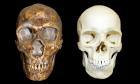 D6TYJC Homo neanderthalensis vs Homo sapiens Skull