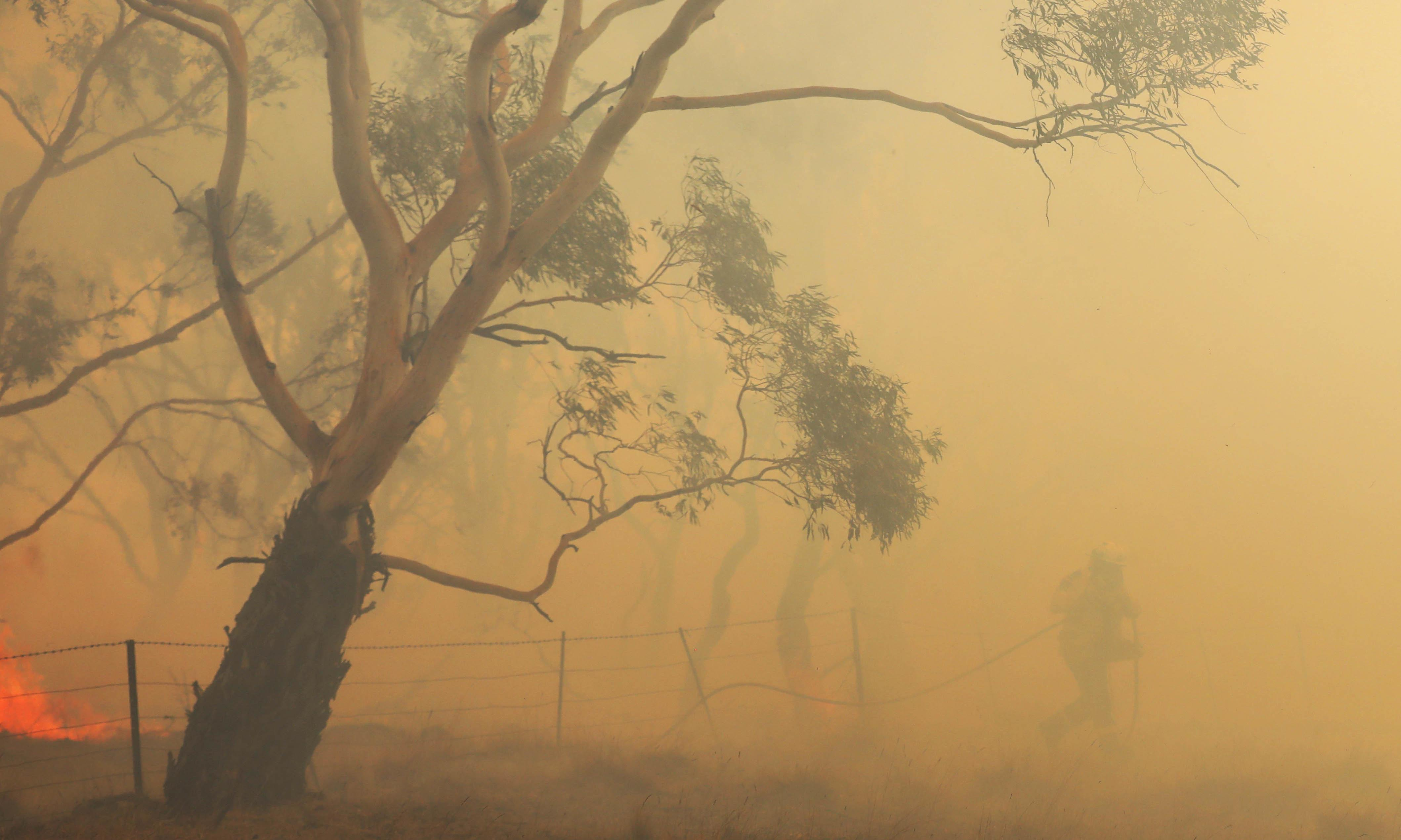 NSW and Canberra fires: more homes reported lost as wind and thunderstorms hit