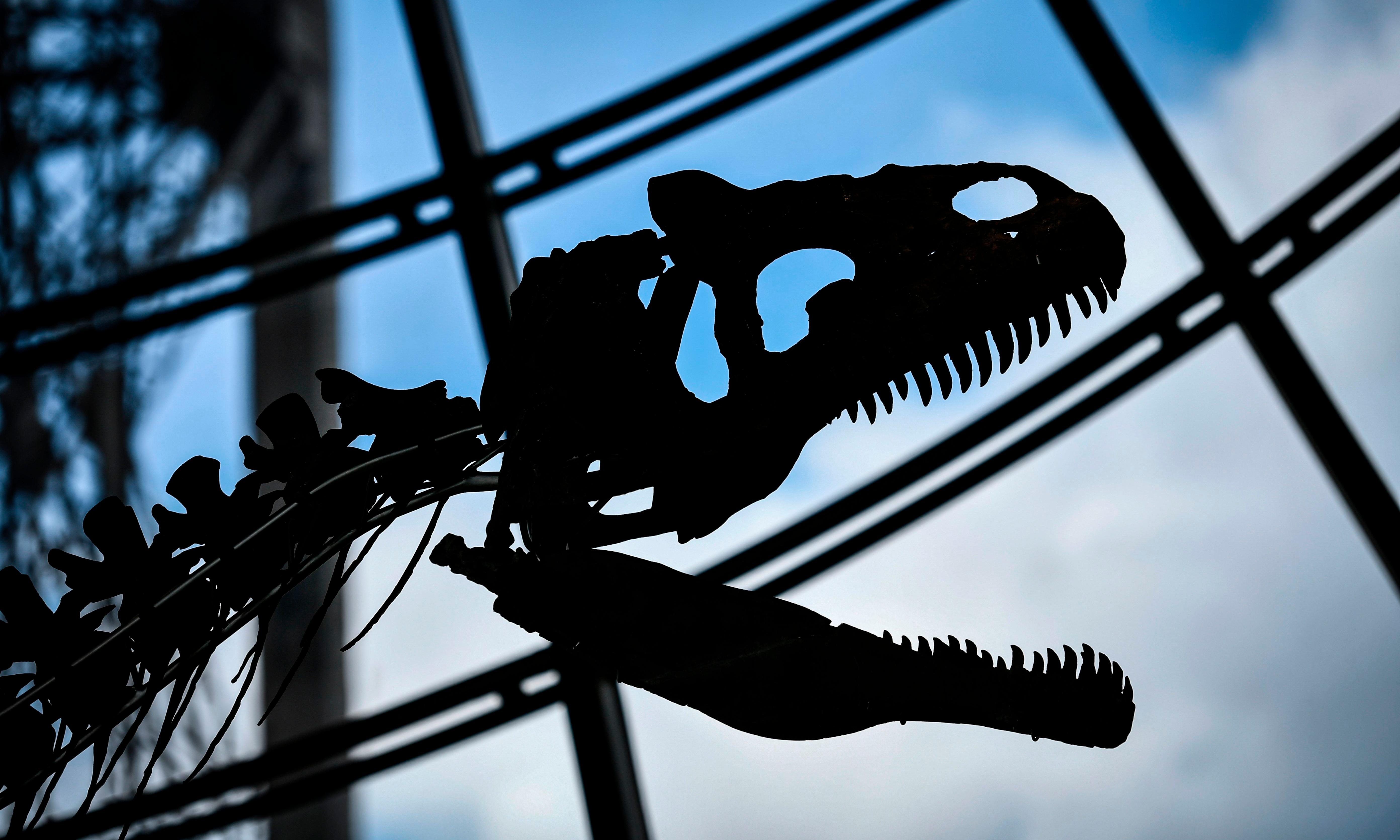 'New' dinosaur species fetches €2m at Paris auction