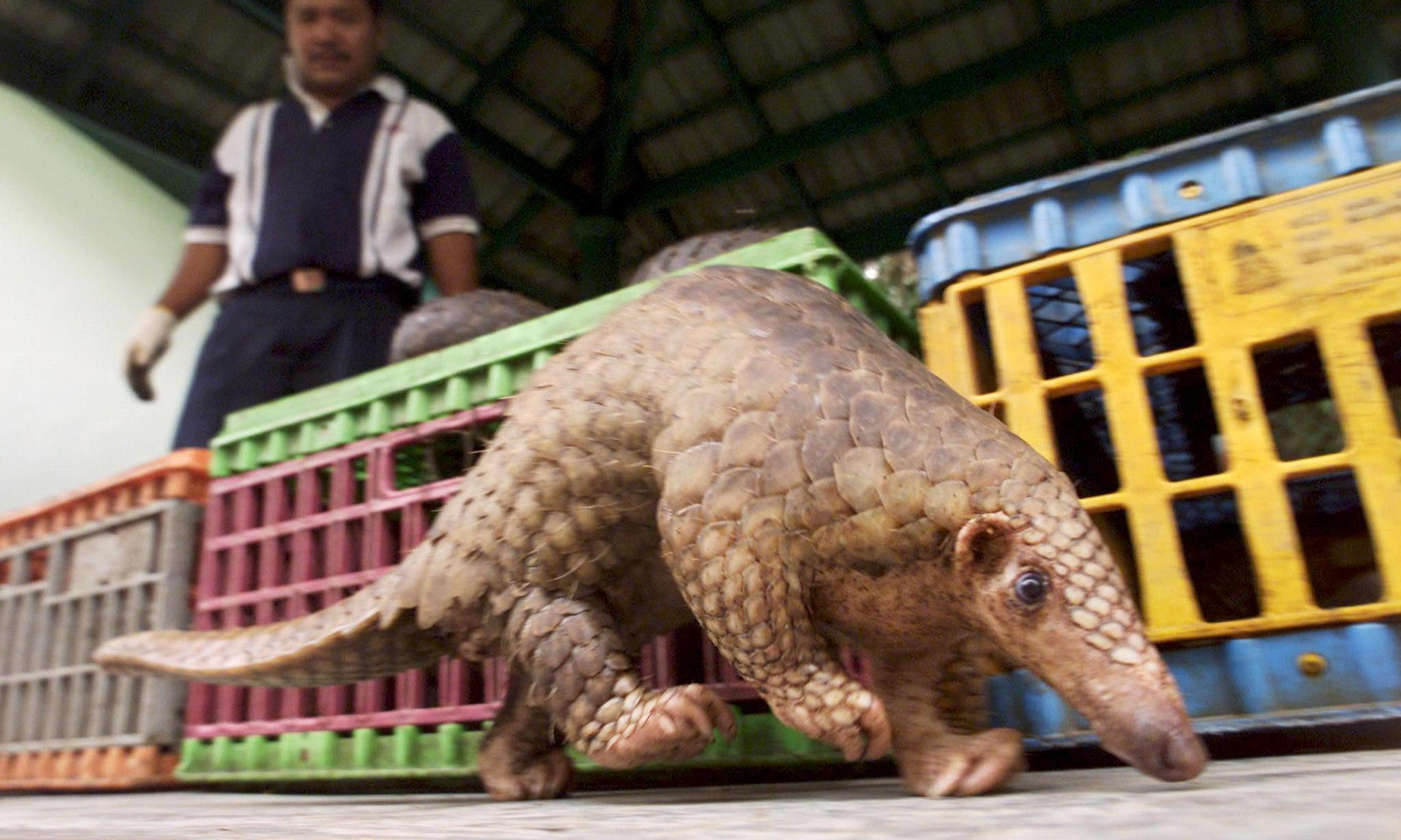 Wildlife trade summit is a 'do or die' moment for endangered animals