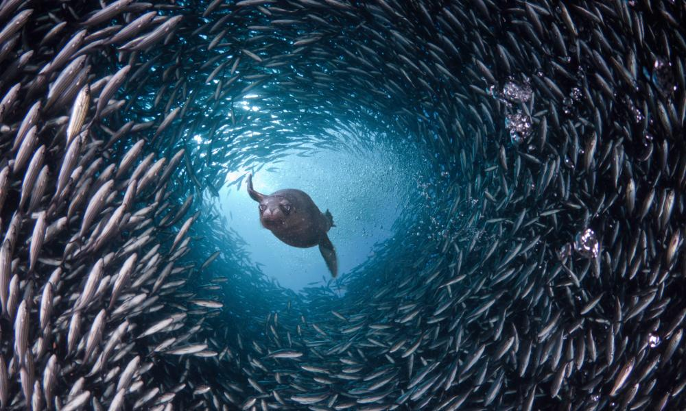 Sea fish tunnel in Galapagos Islands, Equador.