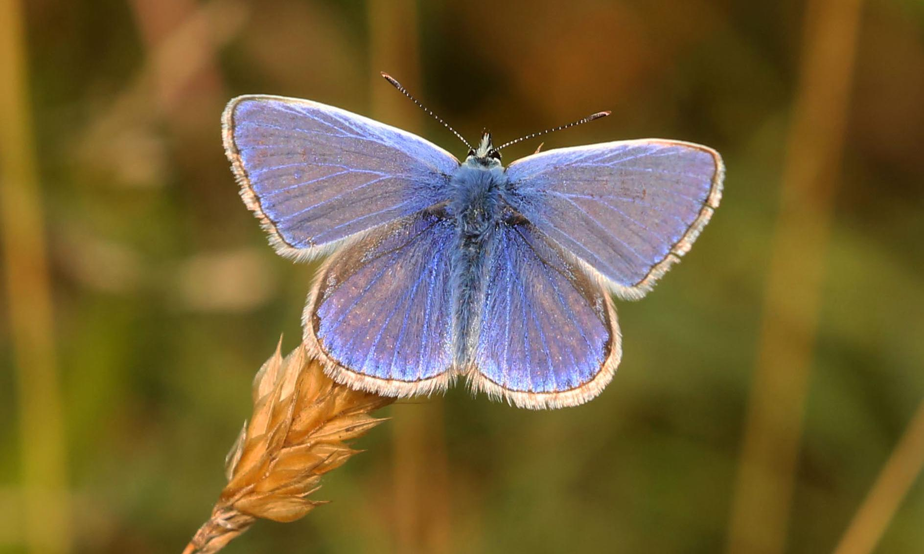 Share your pictures of the Big Butterfly Count