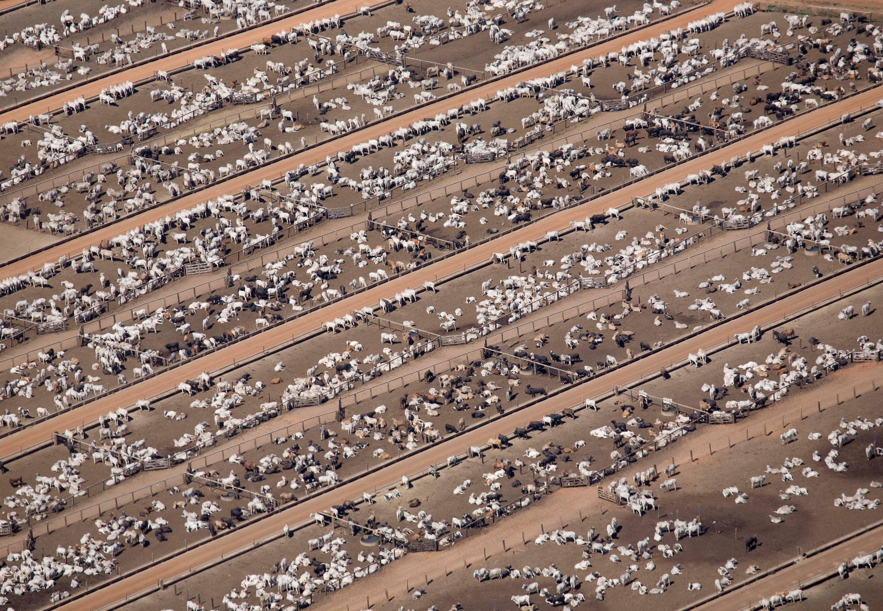 Humans just 0.01% of all life but have destroyed 83% of wild mammals – study