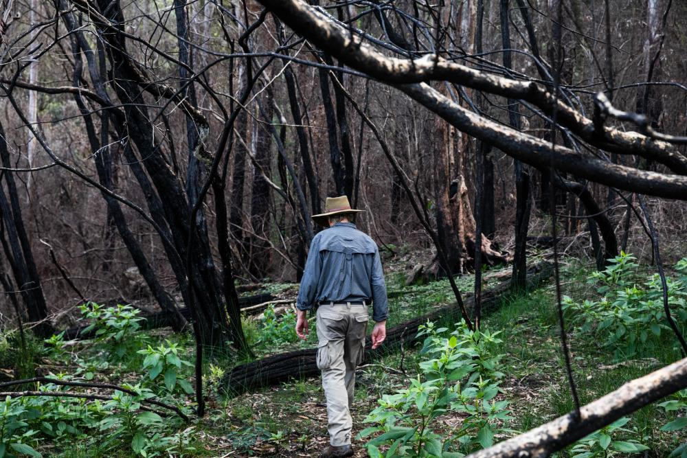Robert Kooyman in a fire-ravaged section of Nightcap national park.