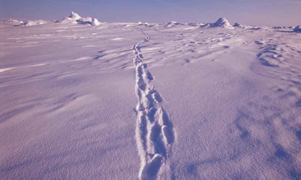 Footprints at the north pole