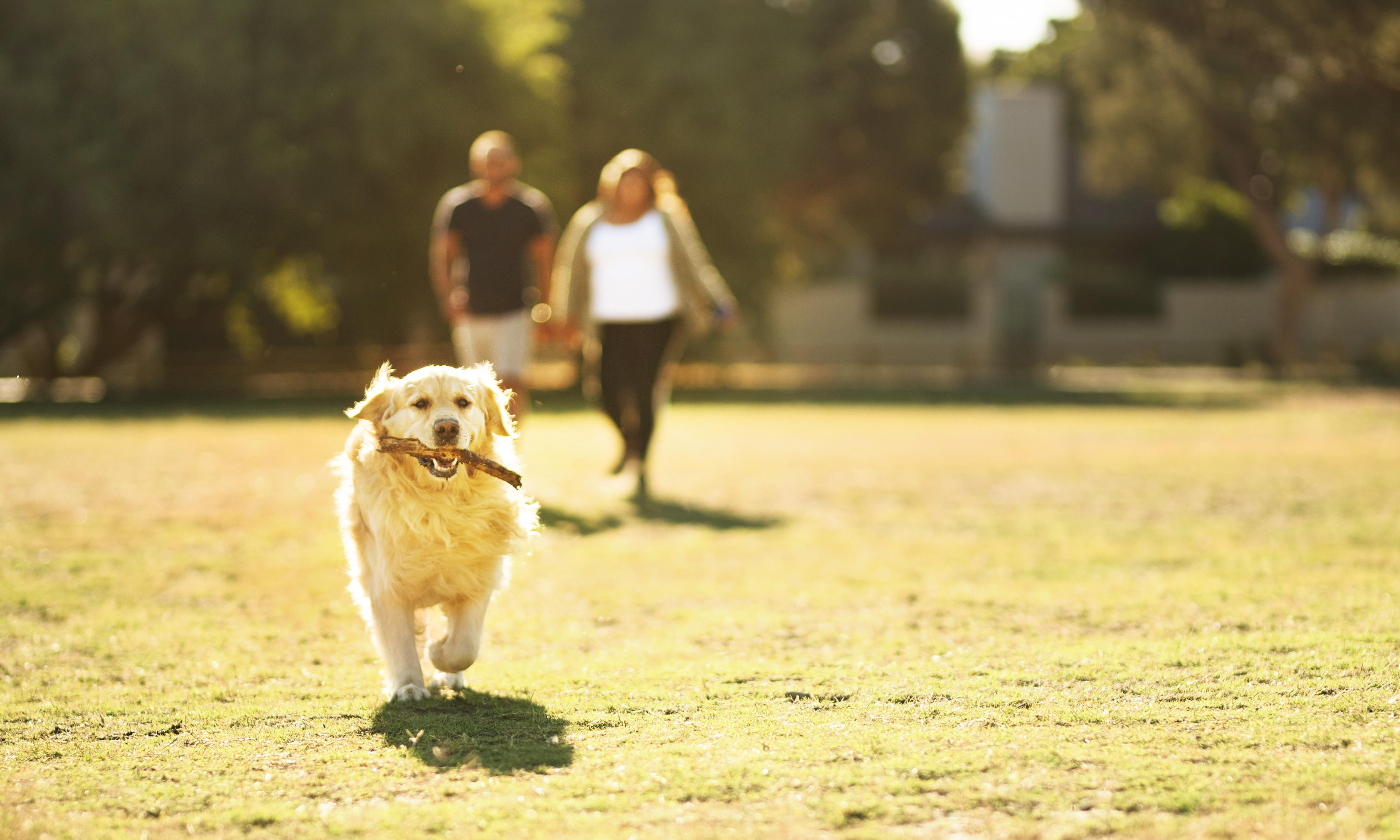 I love my dog. But why must walkies involve horrendous social interactions?