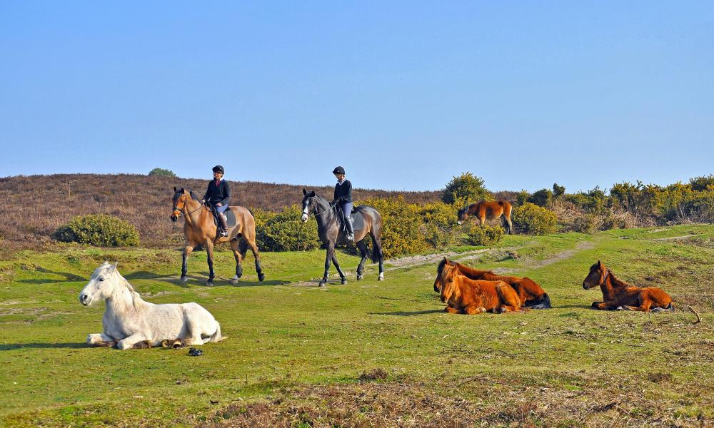 Horse riders and ponies in the New Forest