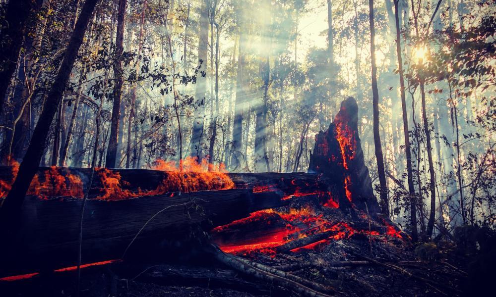 A tree burns in the Gondwana rainforest in November 2019.