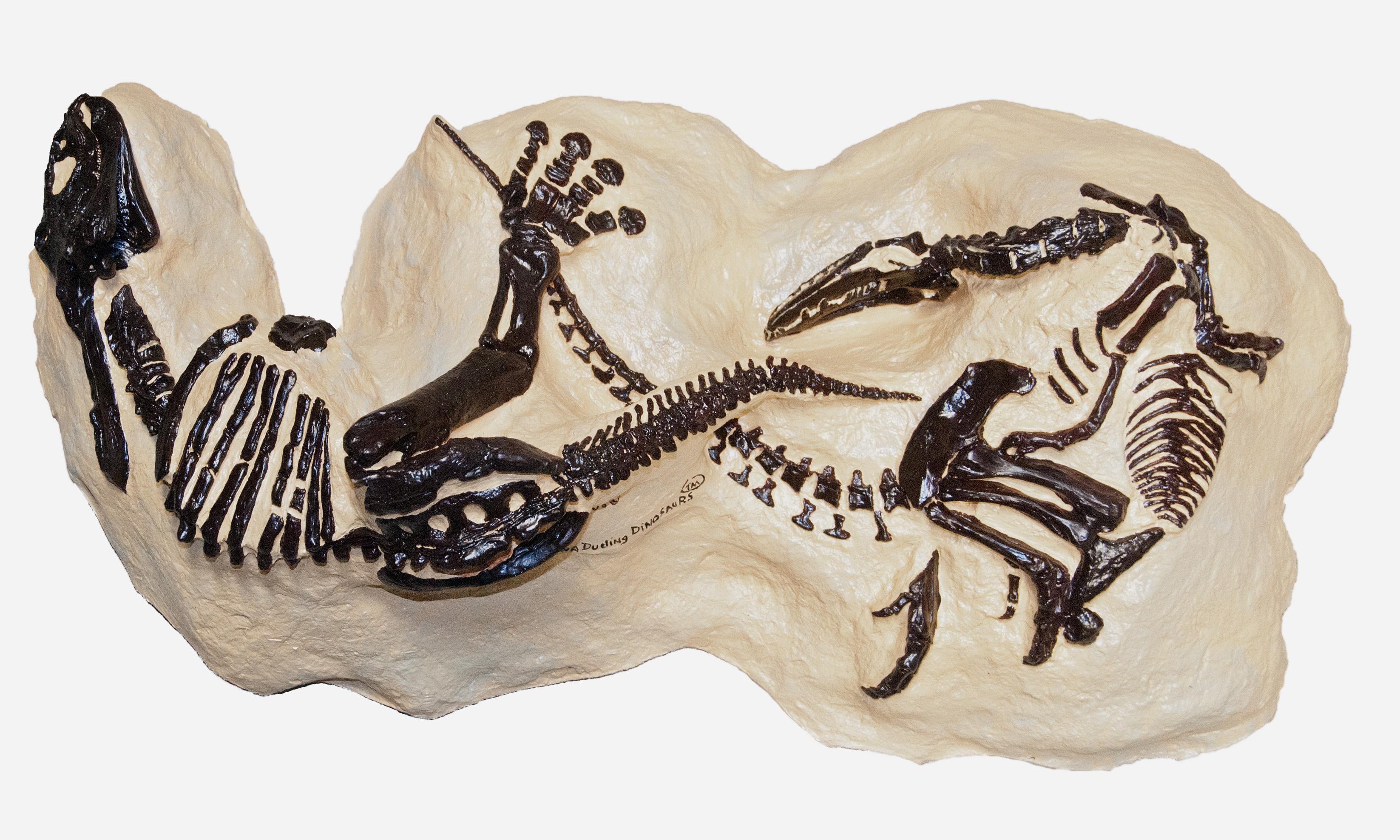 You've found an extraordinary dinosaur skeleton – what do you do now?
