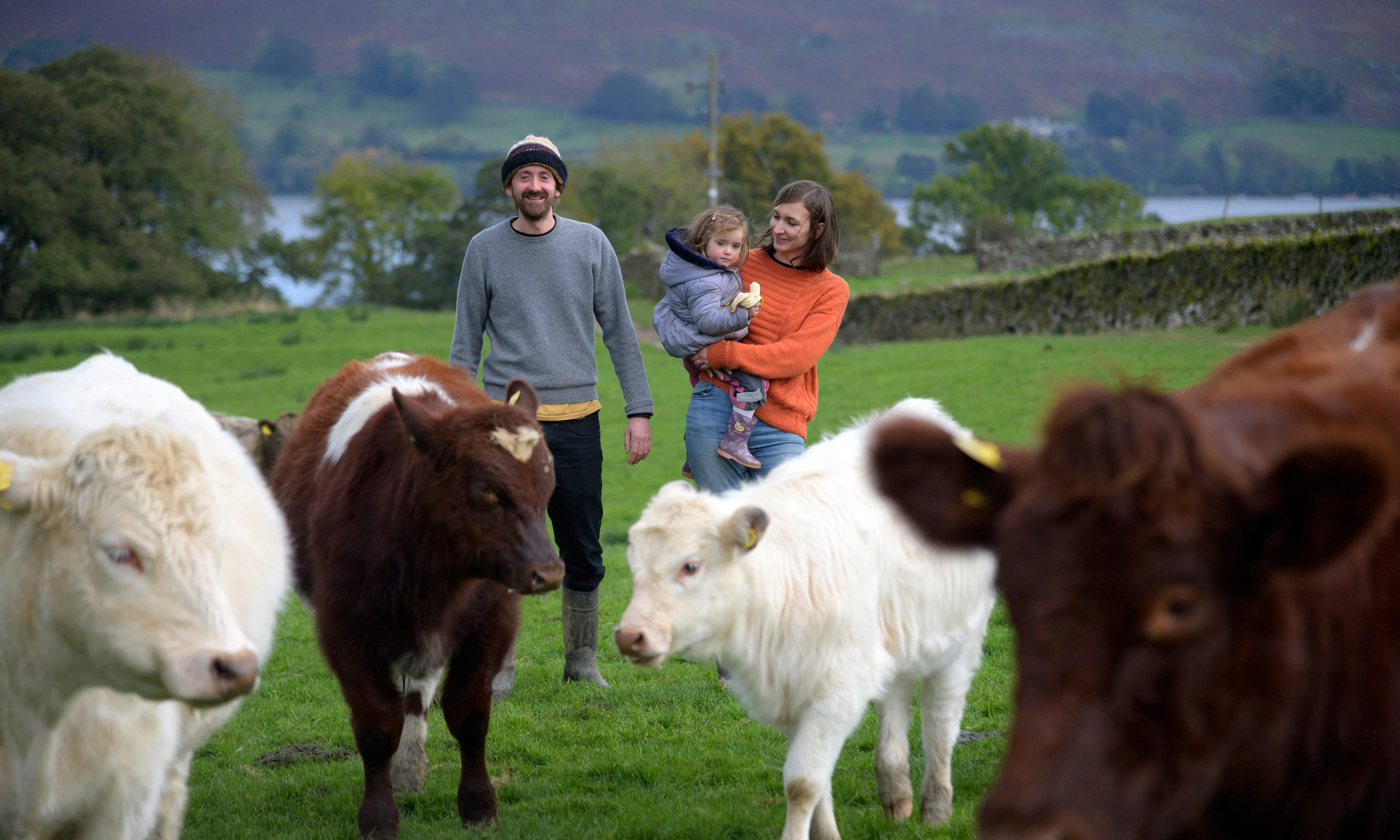 Turning farming upside down: mob grazing on a Cumbrian hill farm