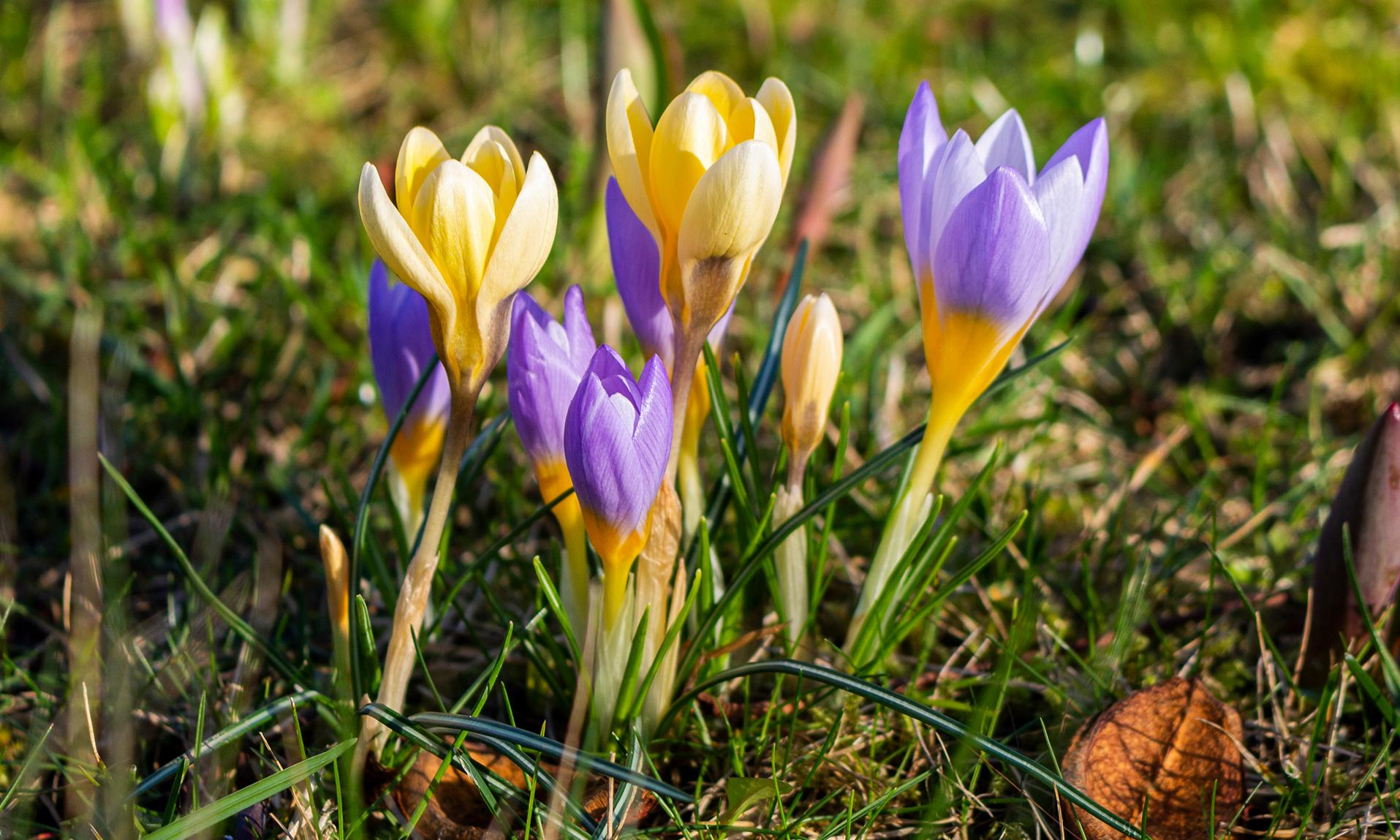'It is a little puzzling': readers on early signs of spring