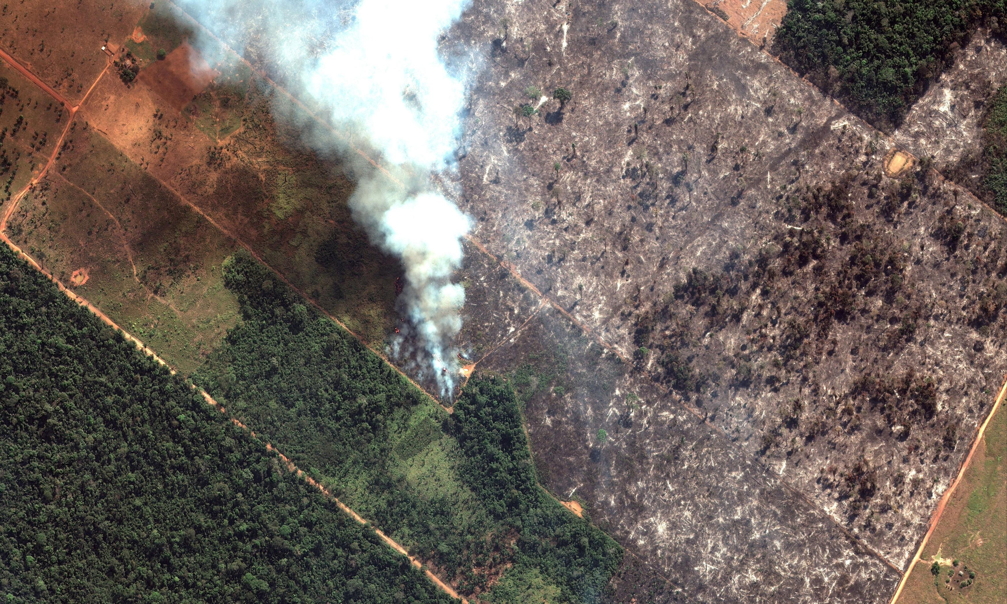 Amazon fires: what is happening and is there anything we can do?