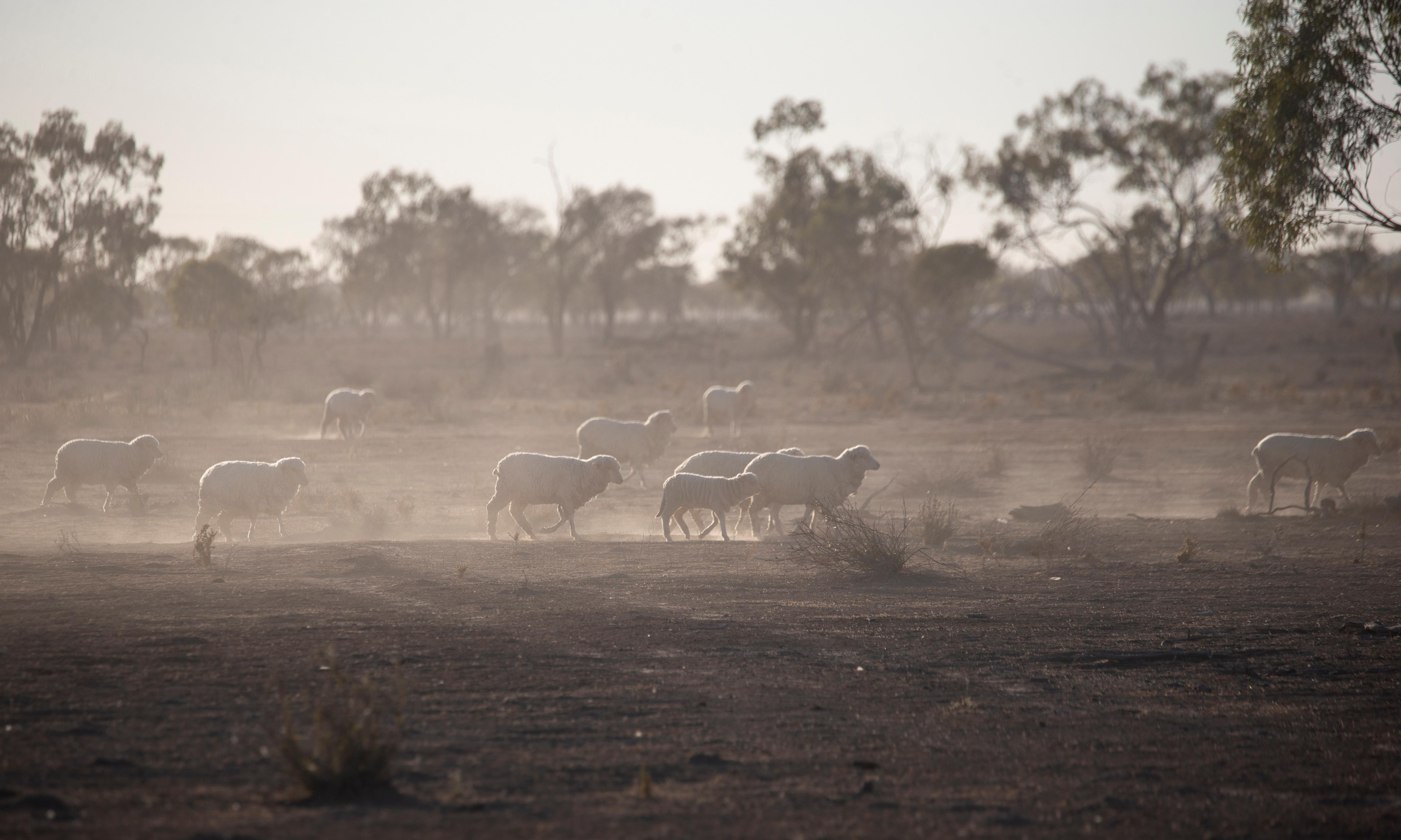 'I don't know how we come back from this': Australia's big dry sucks life from once-proud towns