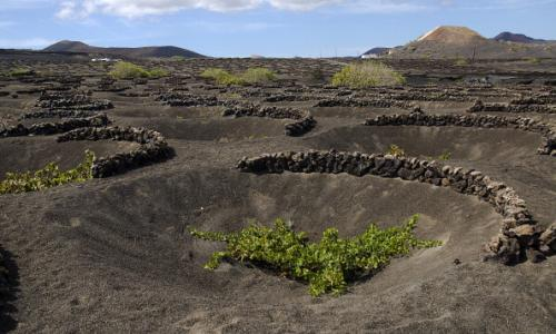 Wine growing in La Geria, Lanzarote …  John Szabo surveys Volcanic Wines.