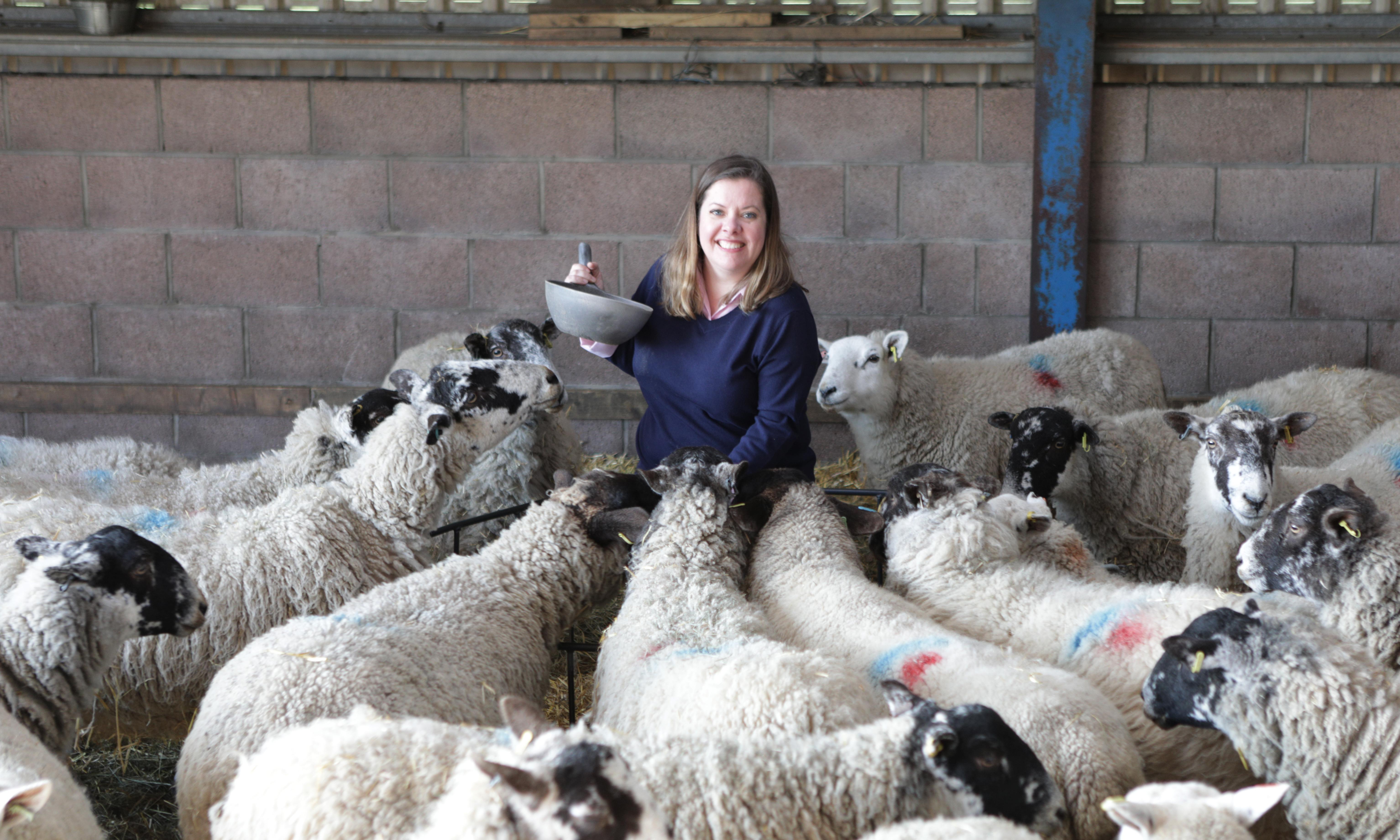 'I'm skint – I know why people buy cheap meat': the truth about being a farmer