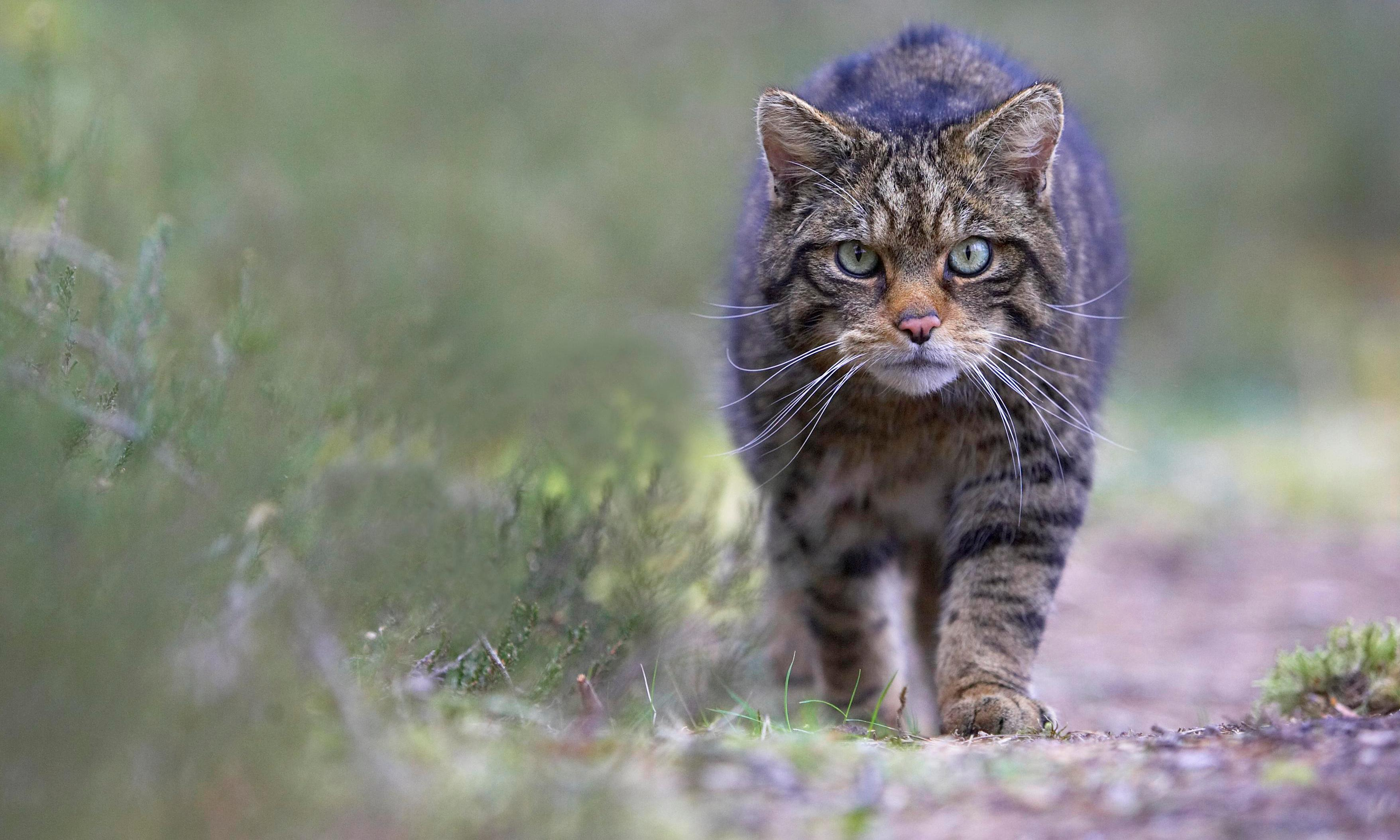 Populations of UK's most important wildlife have plummeted since 1970