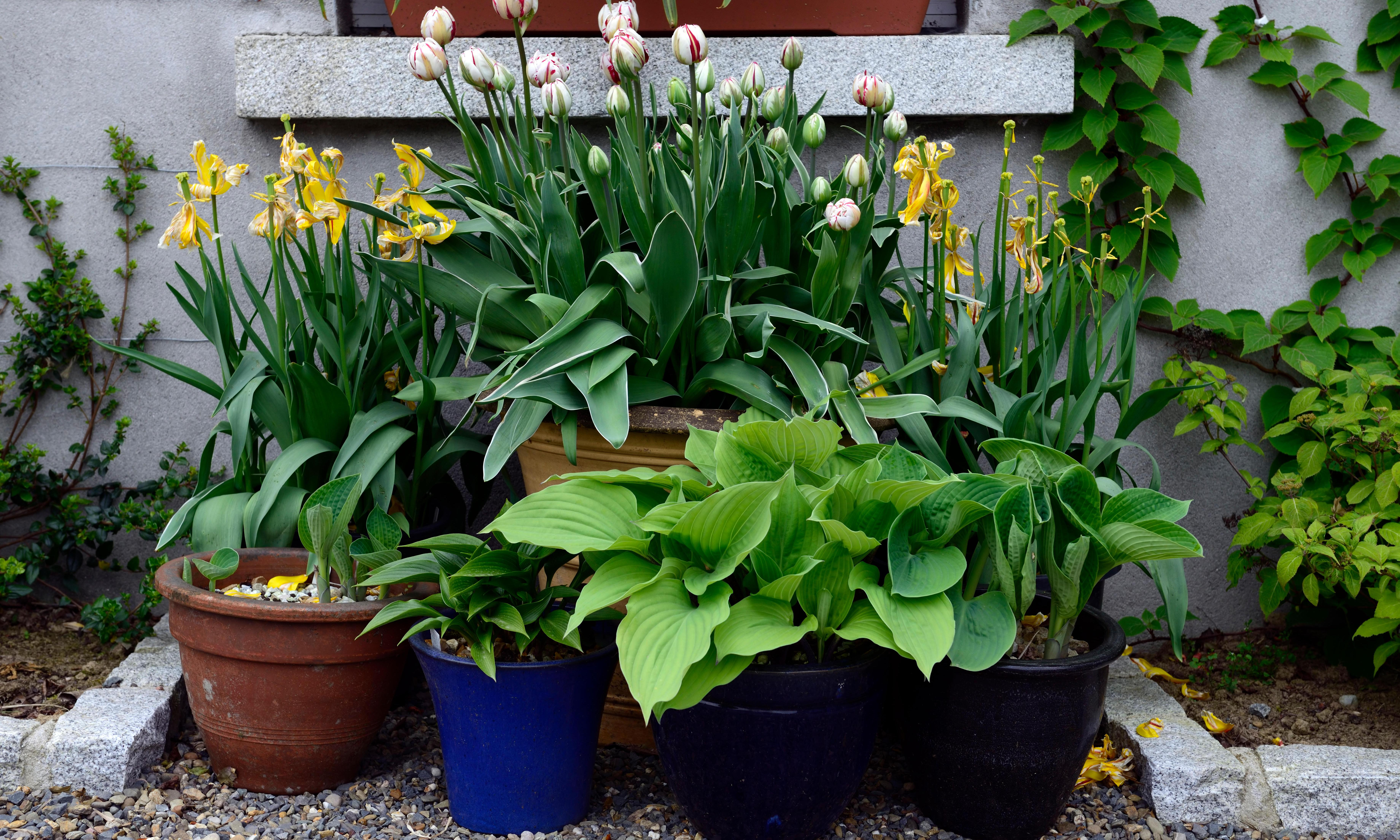 Have your plants flopped? Here's how to rescue them