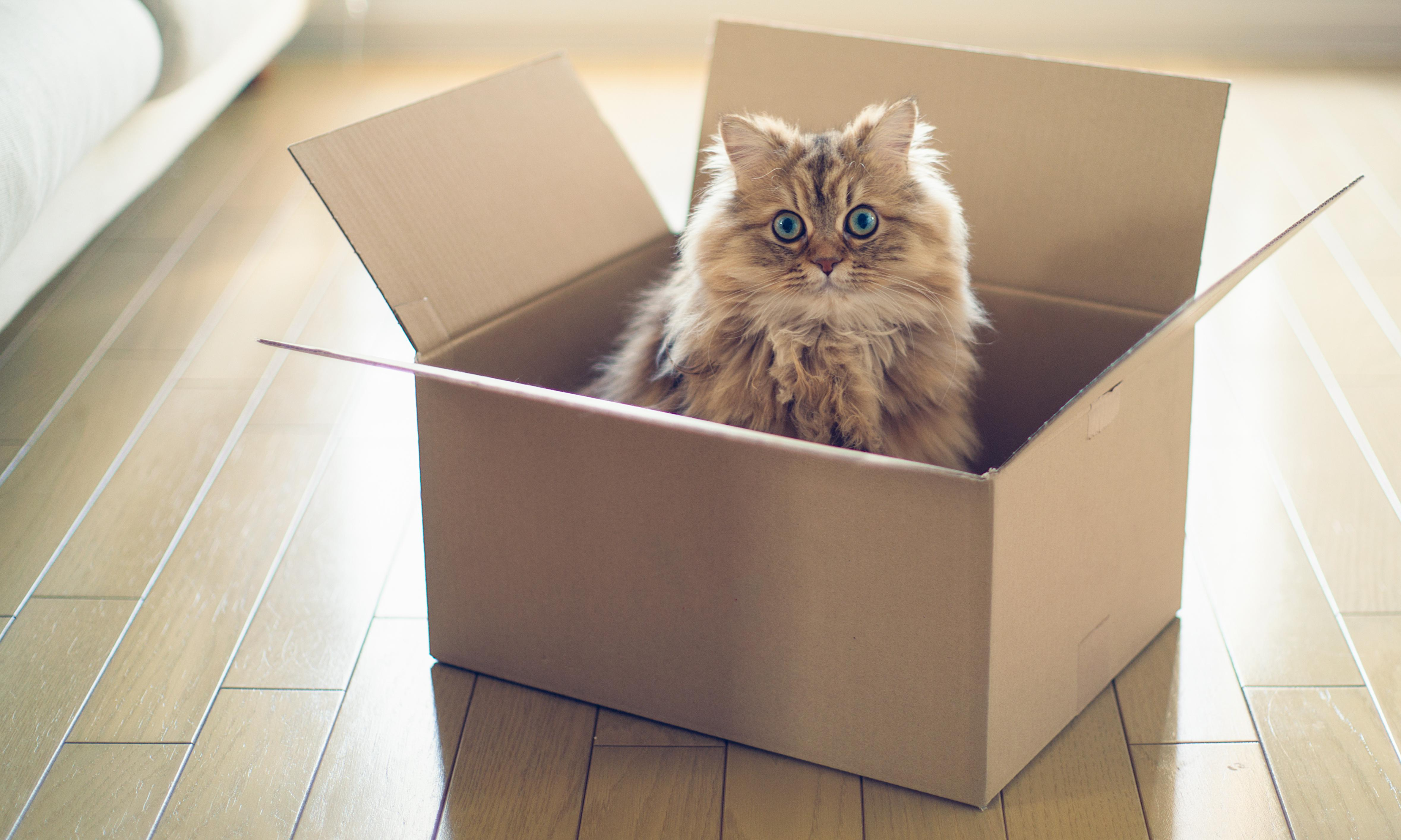 Schrödinger's cat could be saved, say scientists