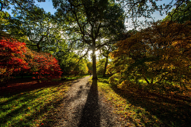 Buy a classic Guardian photograph: Westonbirt arboretum