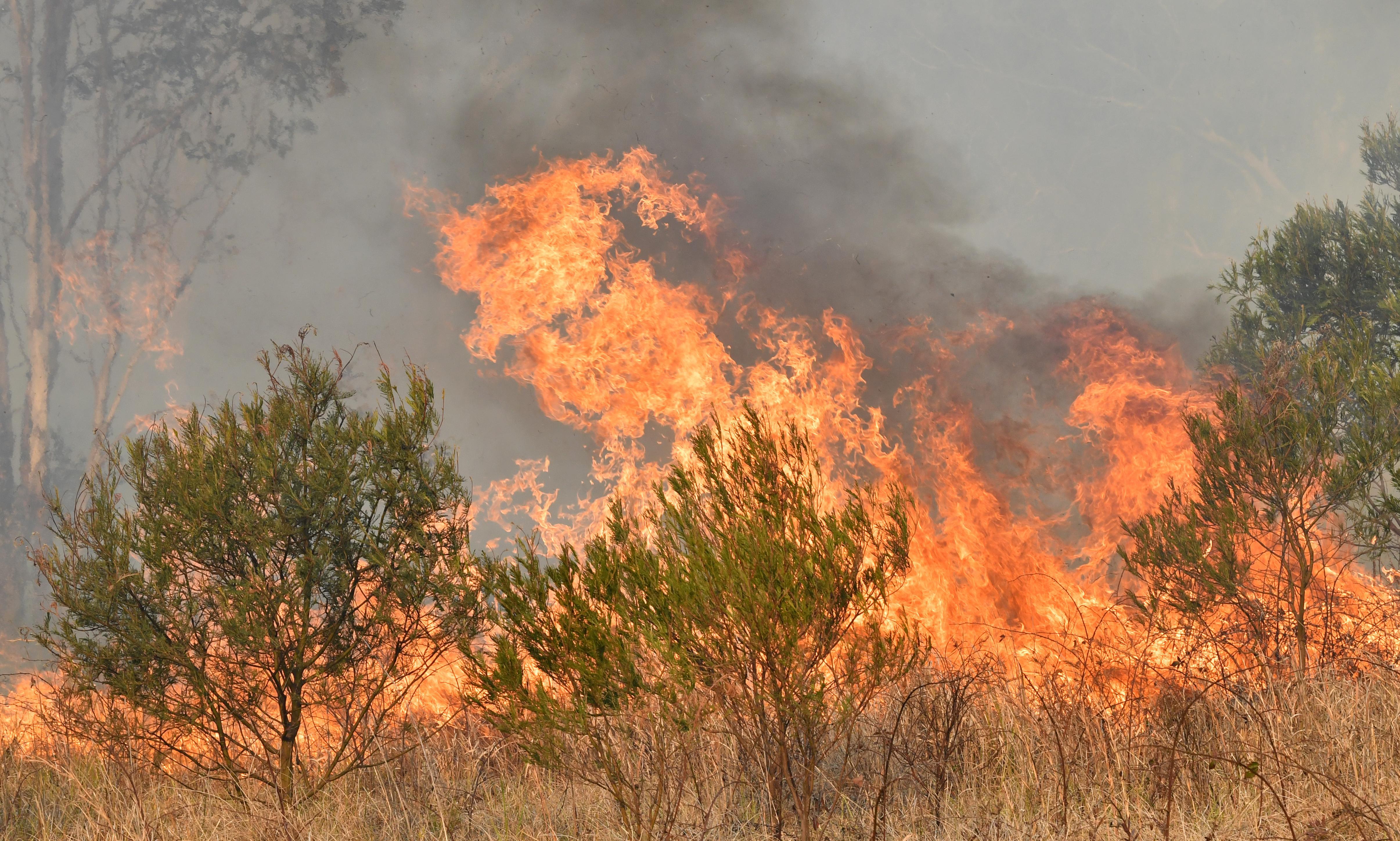 'Like a hell': Sunshine Coast locals see suburban street become a firestorm