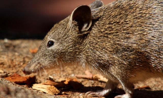 'Silent death': Australia's bushfires push countless species to extinction