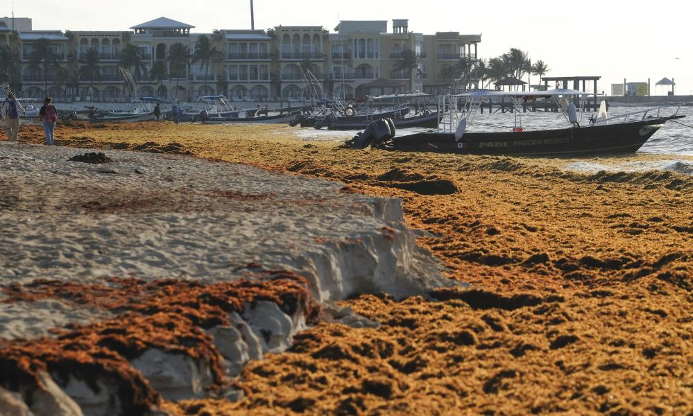 Sargassum covers the beach in Playa del Carmen, Mexico.