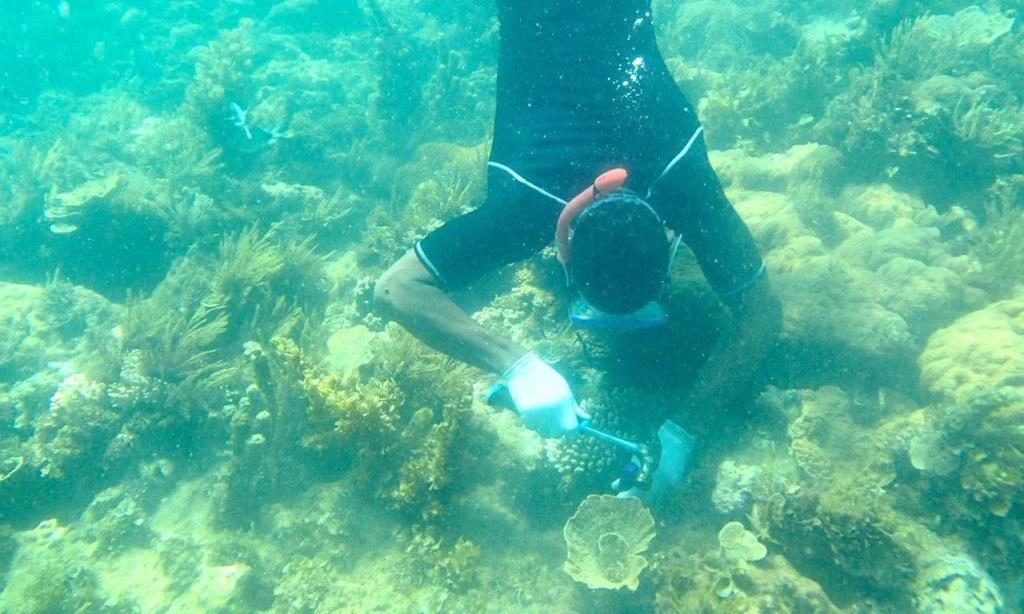 'Lobsters and octopuses are back': the Kenyan women leading a reef revival