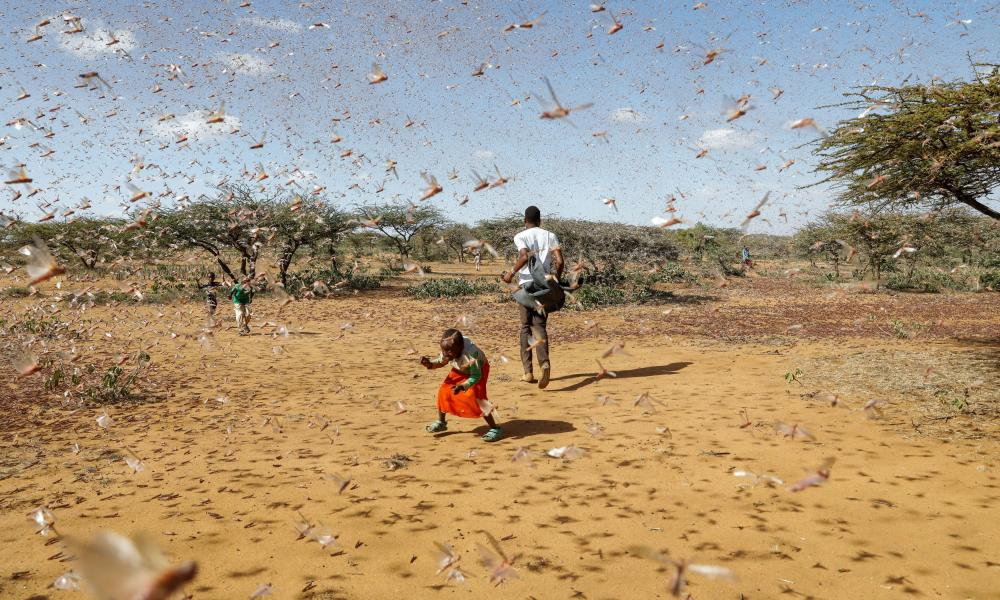 A child tries to chase away a swarm of desert locusts in Naiperere, near the town of Rumuruti, Kenya, January 2021