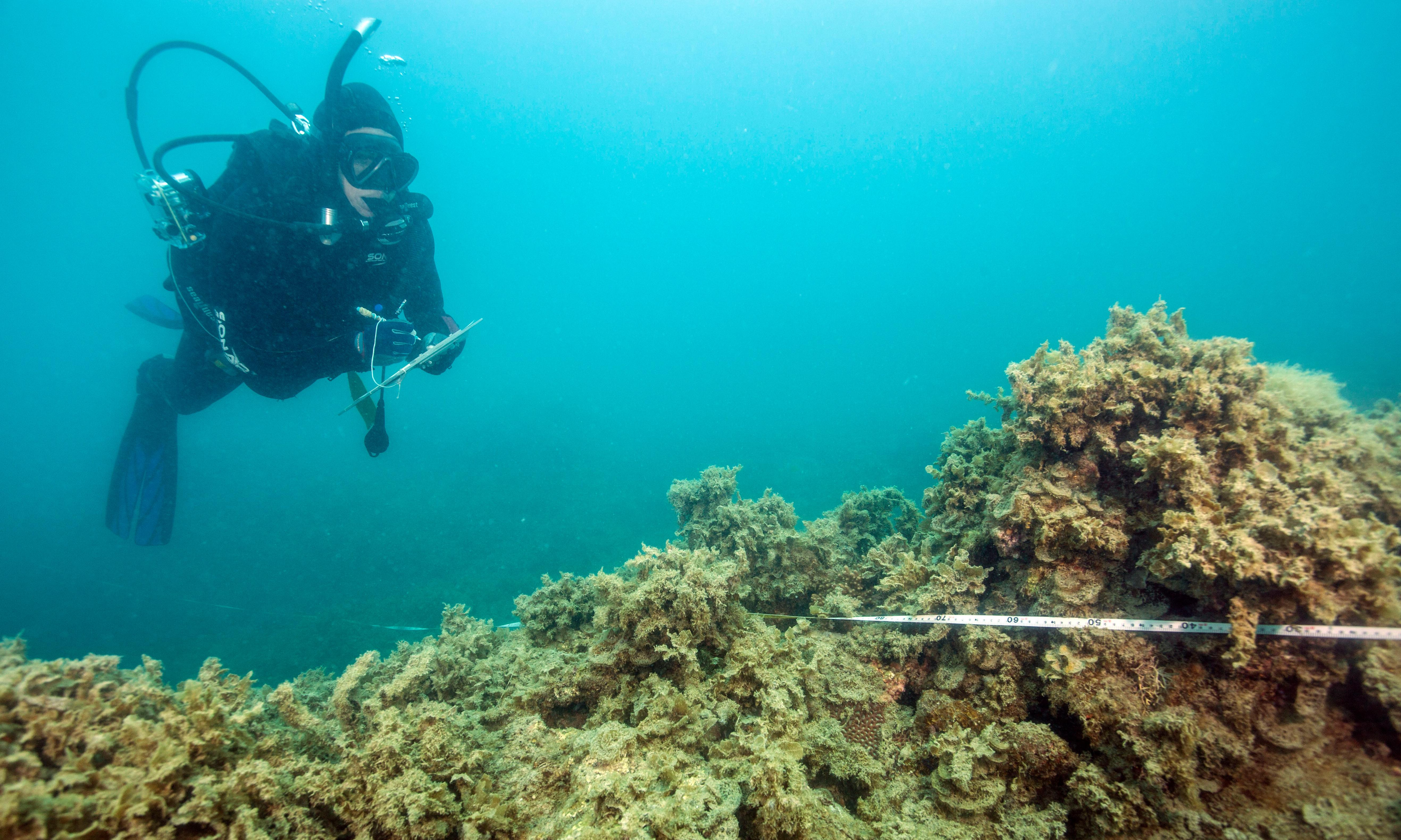 Coral cover around popular Great Barrier Reef islands has almost halved