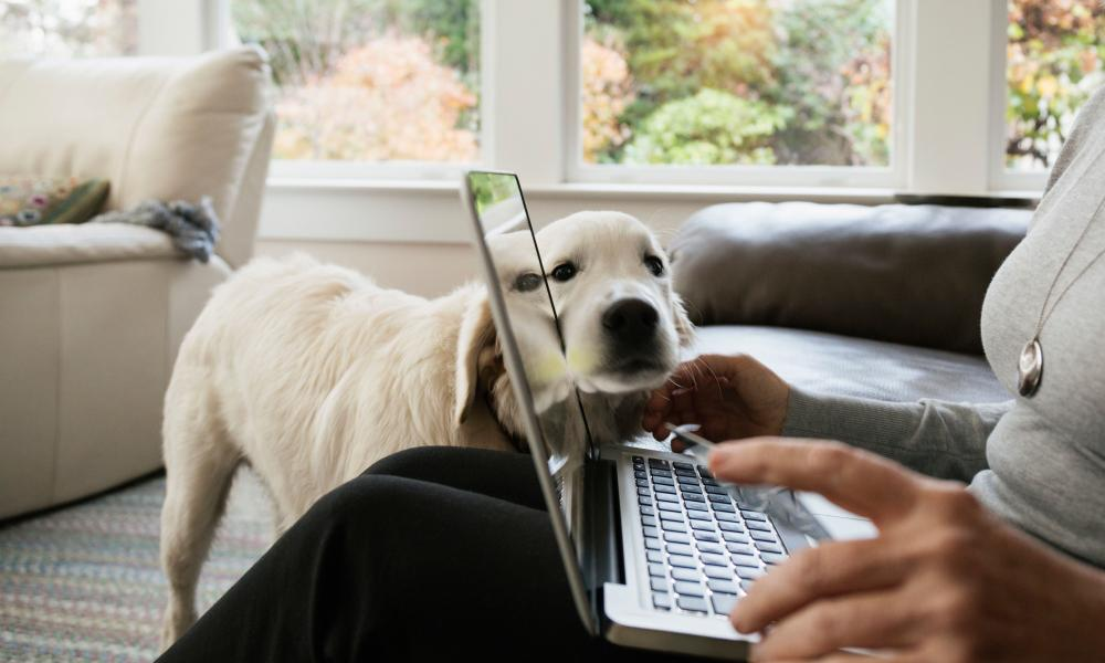 Ordering pet supplies online