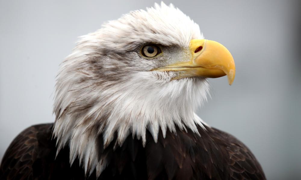 Kayla the Eagle