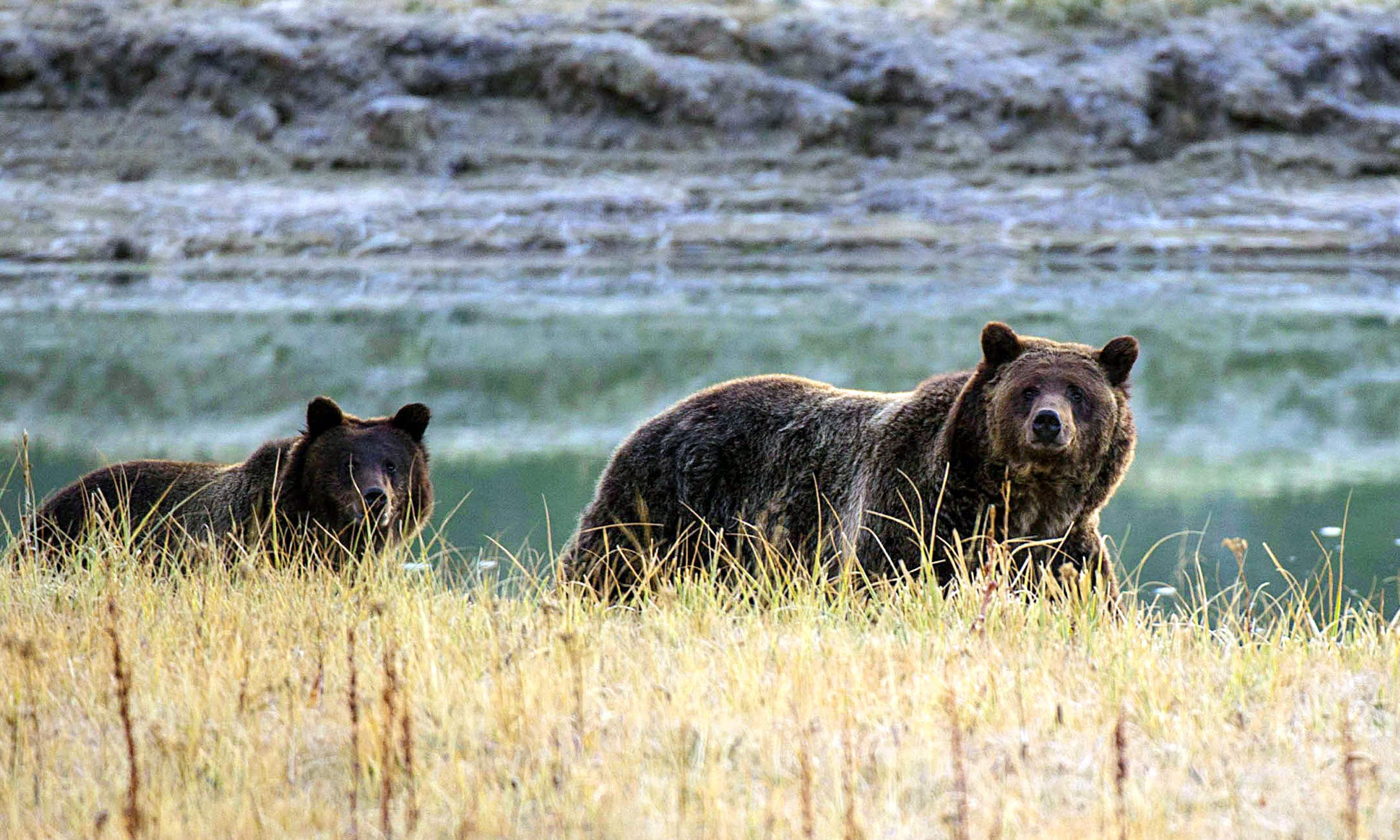 Trump administration reverses decision to use 'cyanide bombs' to kill wild animals