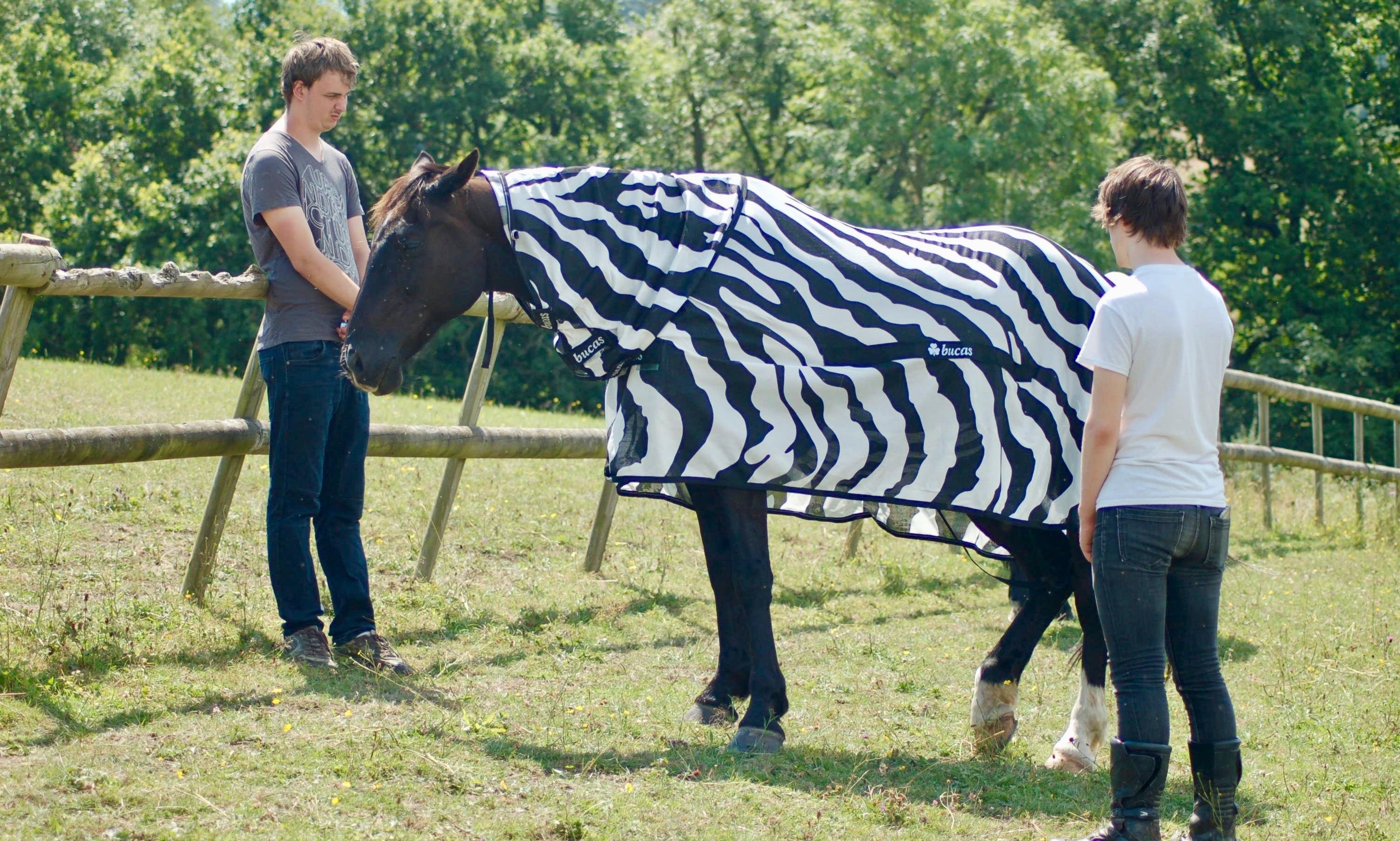 Why the zebra got its stripes: to deter flies from landing on it