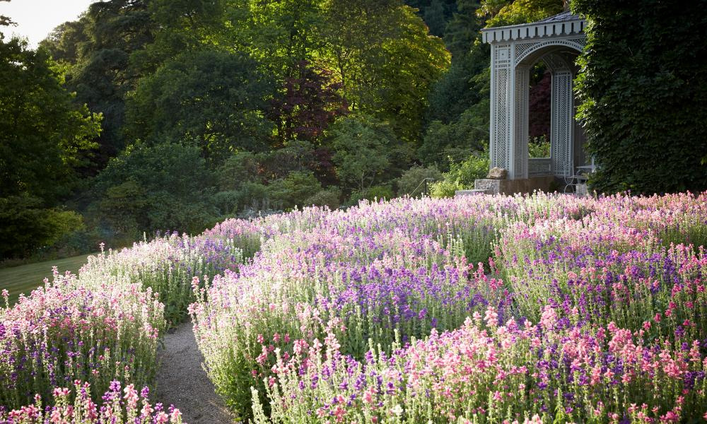 Flowers and follies: Hotel Endsleigh gardens