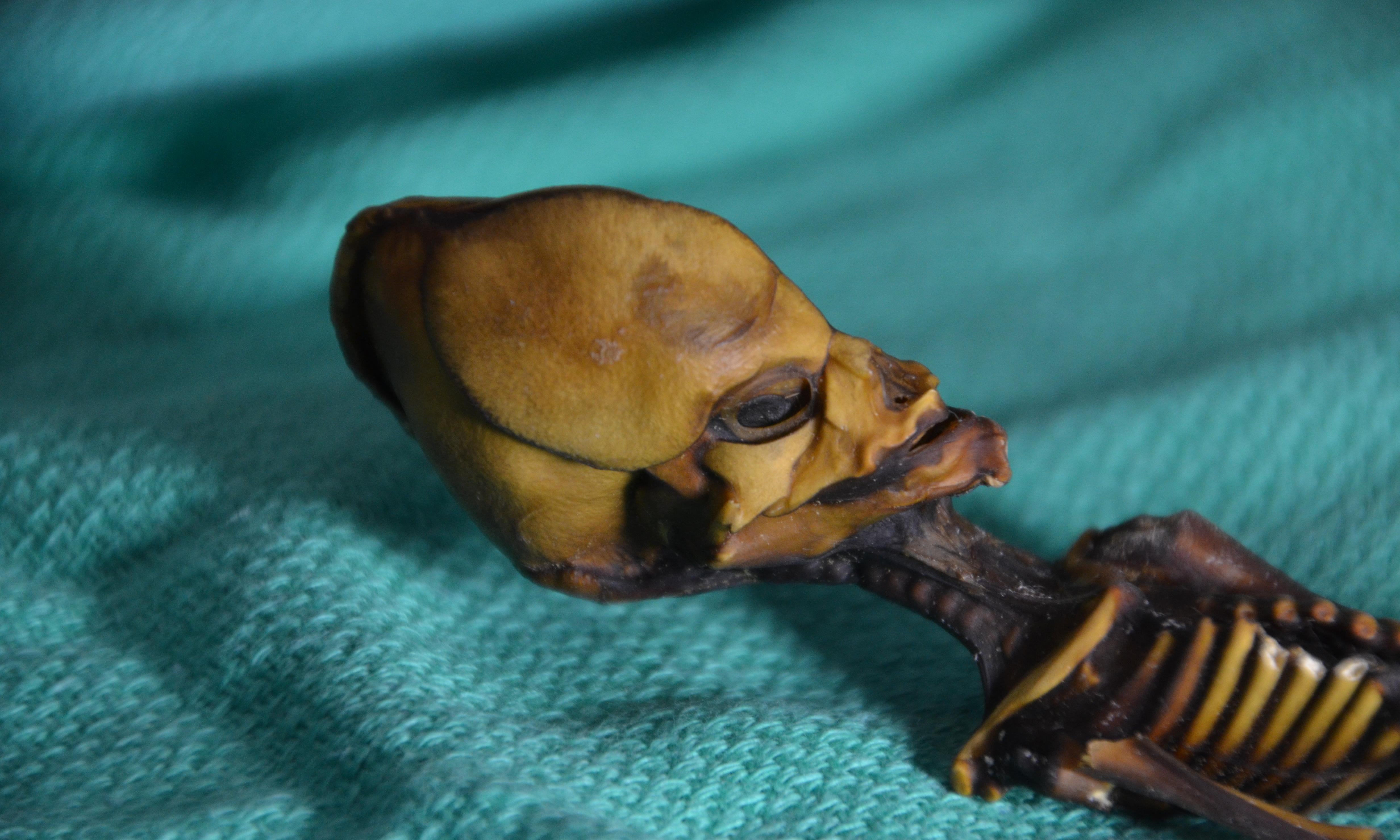 Genetic tests reveal tragic reality of Atacama 'alien' skeleton