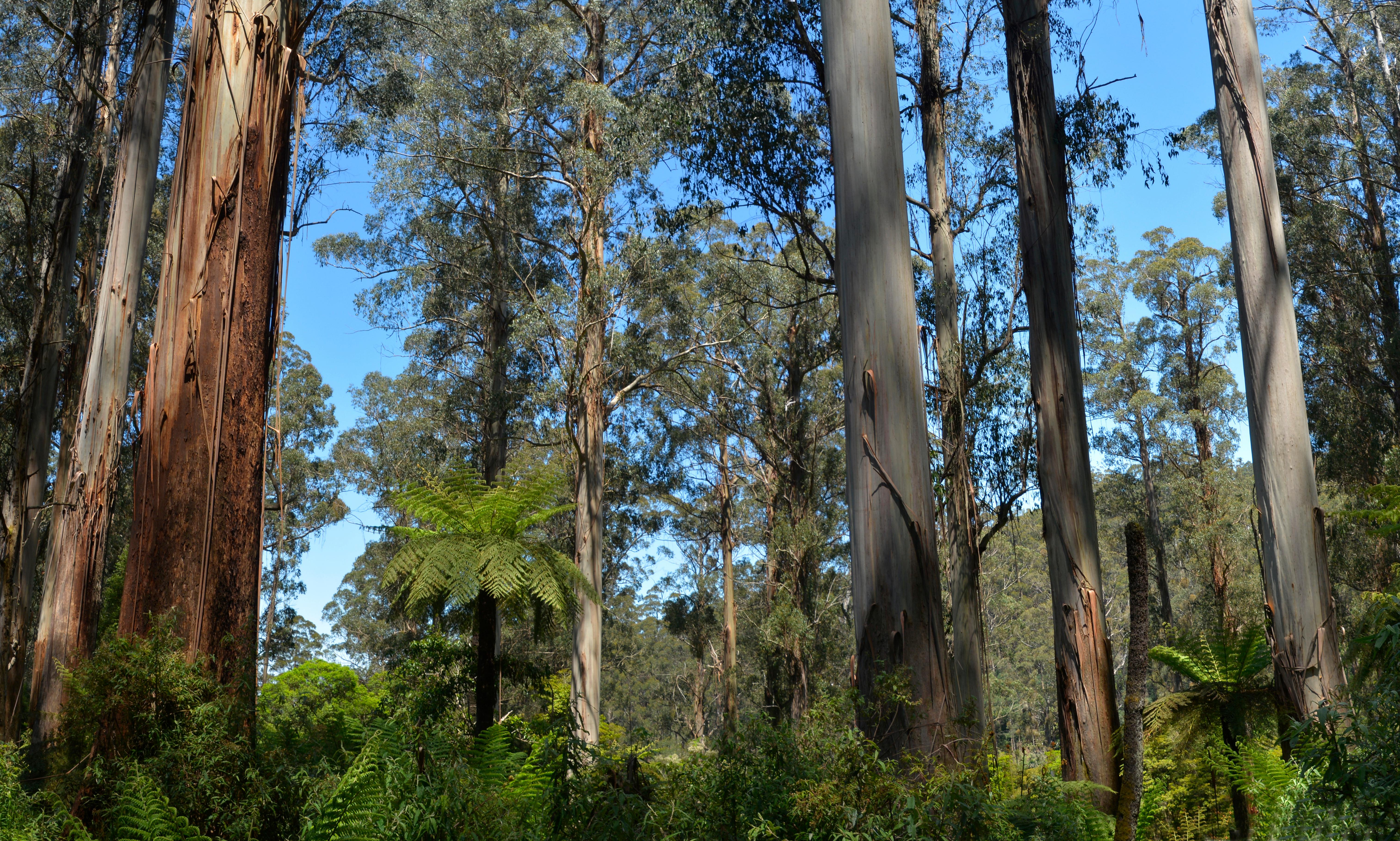 Call to end logging of 'protective' native forests in wake of bushfire crisis