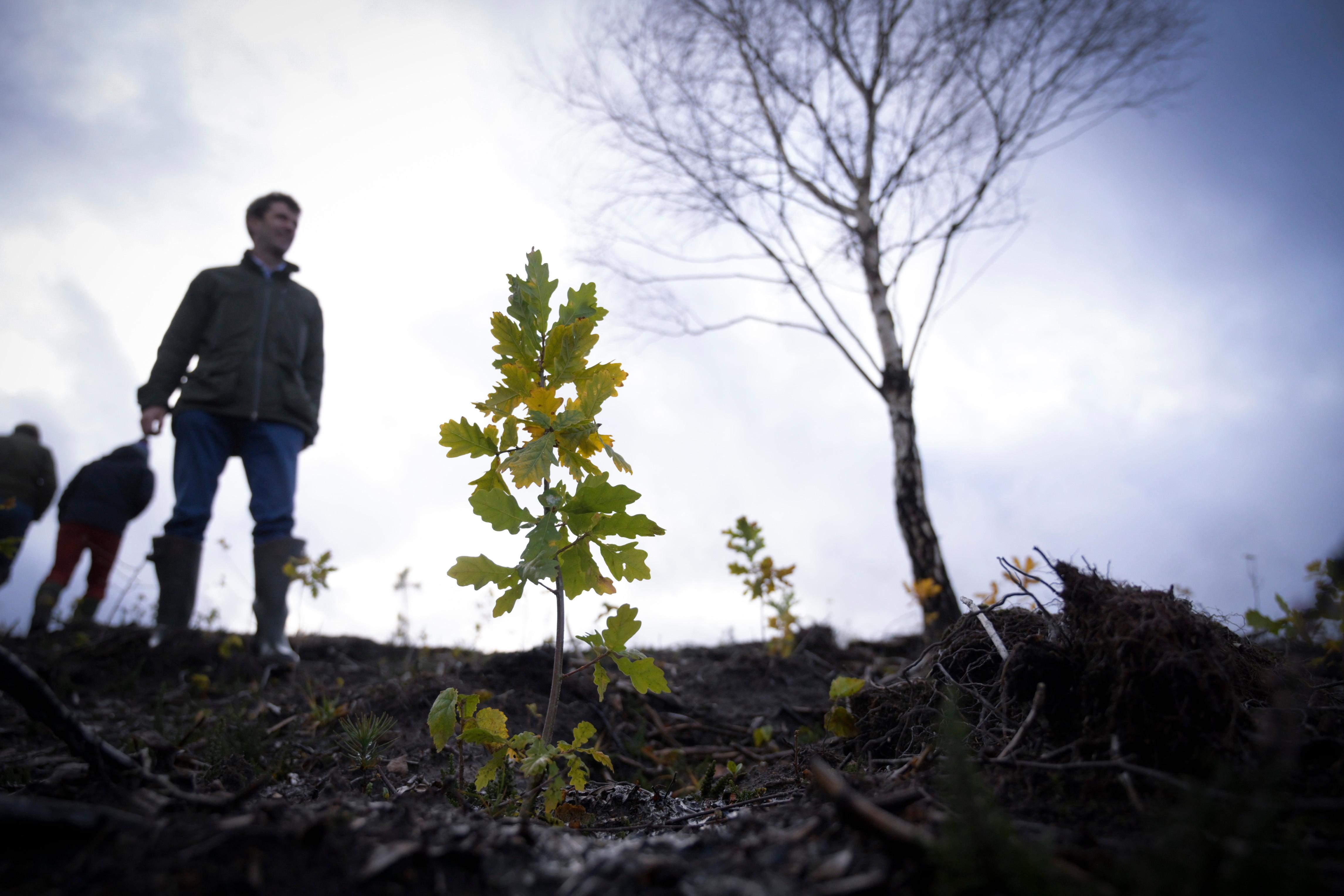 Reforesting the UK: 'Trees are the ultimate long-term project'