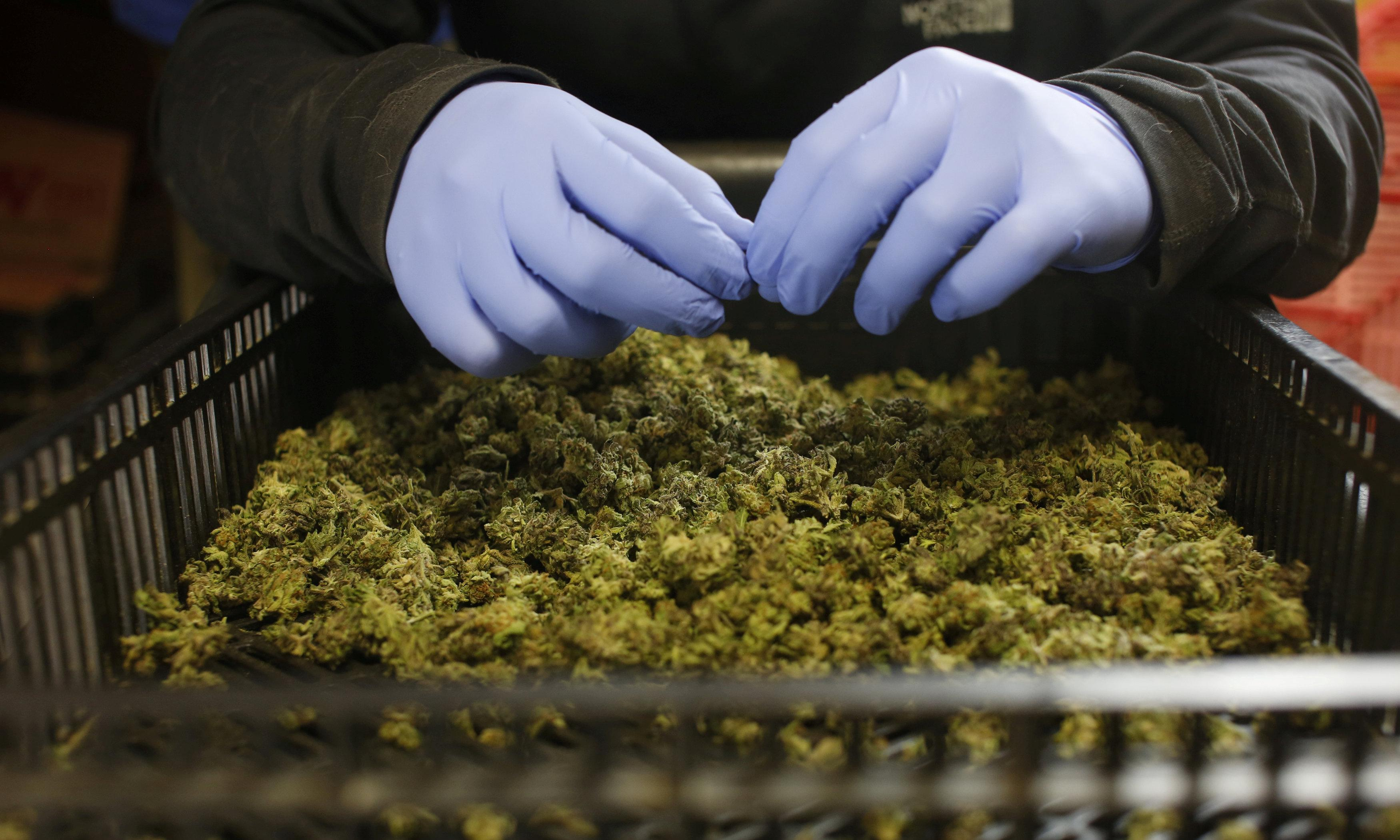 New Zealand passes laws to make medical marijuana widely available
