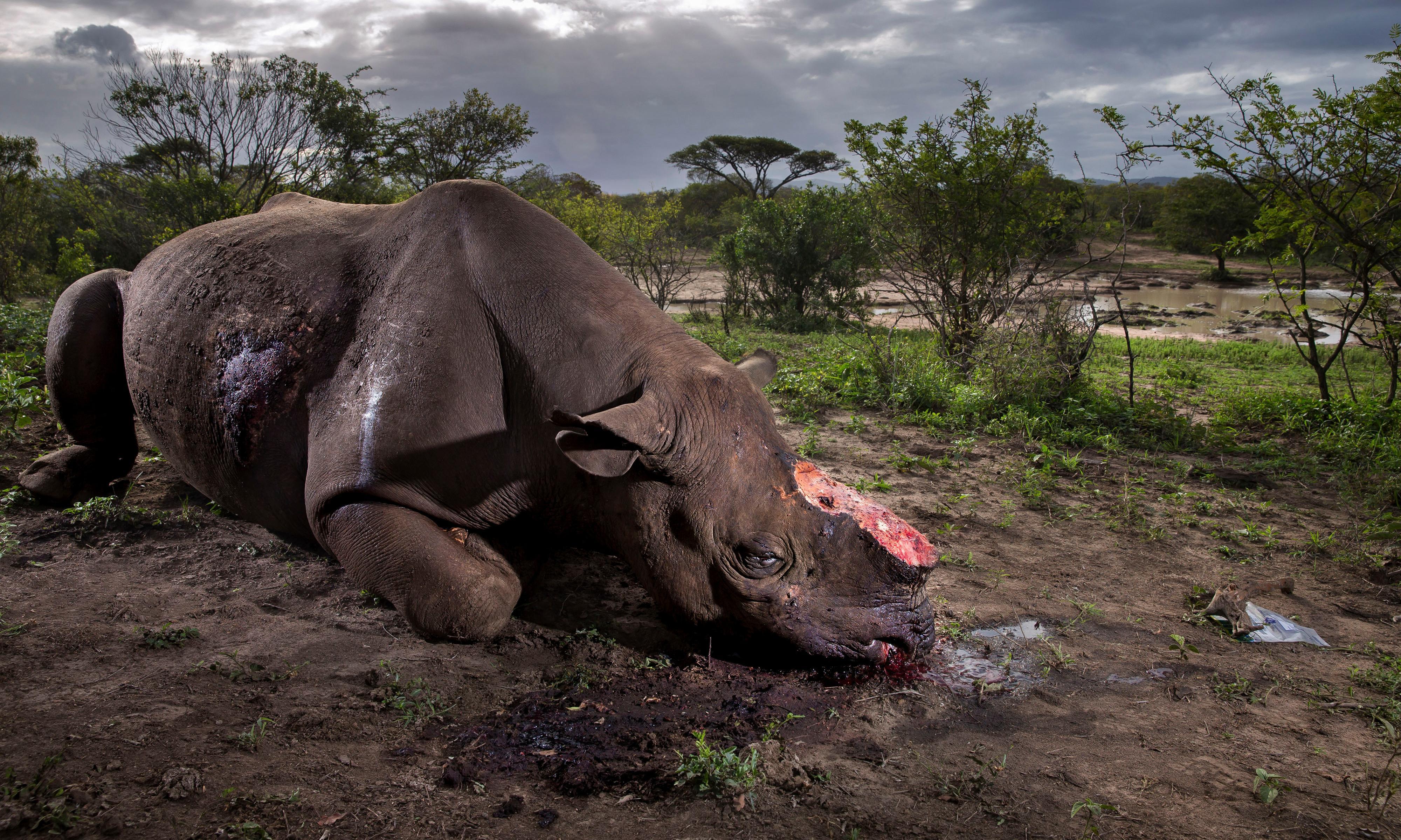 'Terror being waged on wildlife', leaders warn