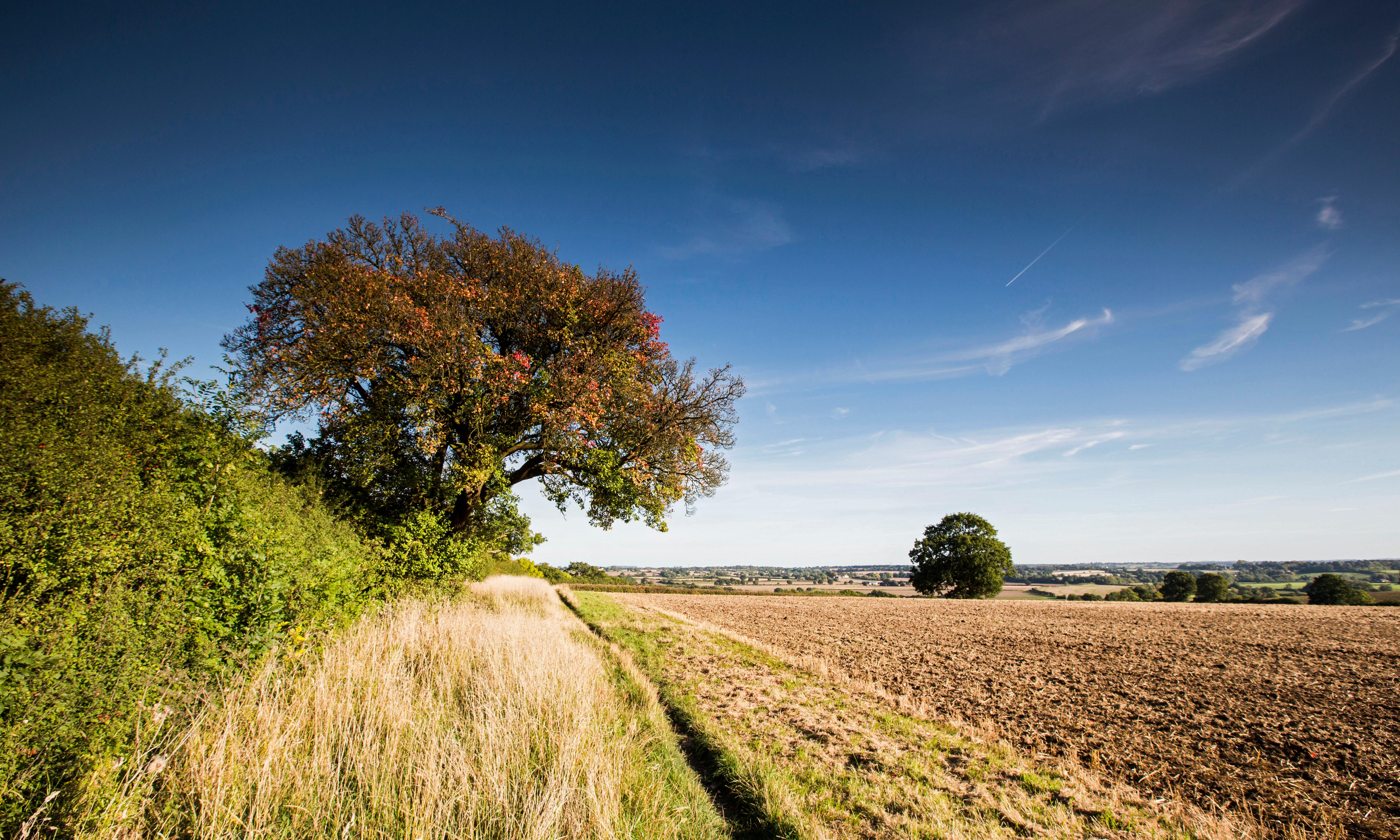 'It's an enormous act of ecological vandalism': the ancient forests under threat from HS2